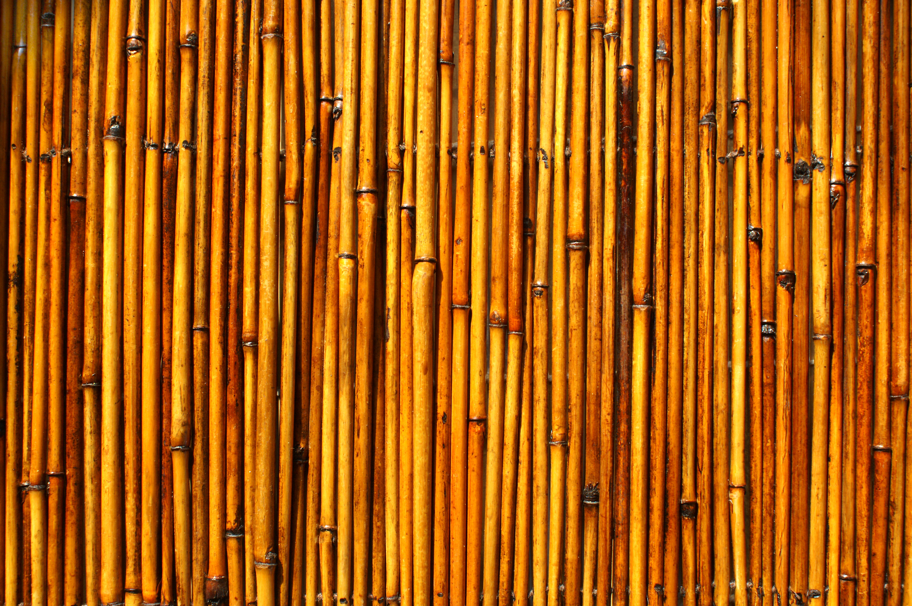 Bamboo texture, Bamboo, Texture, Wood, Wooden, HQ Photo