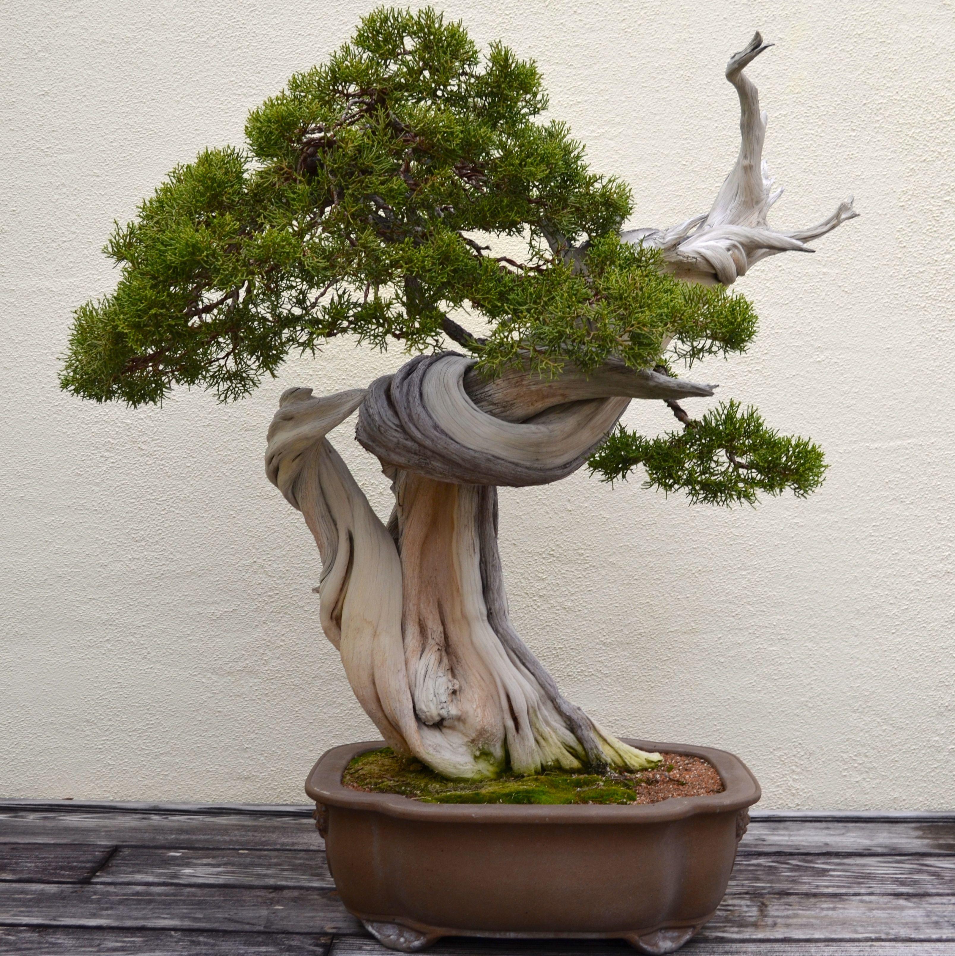 Creative Living Room with Bonsai Tree   Rememberingfallenjs.com
