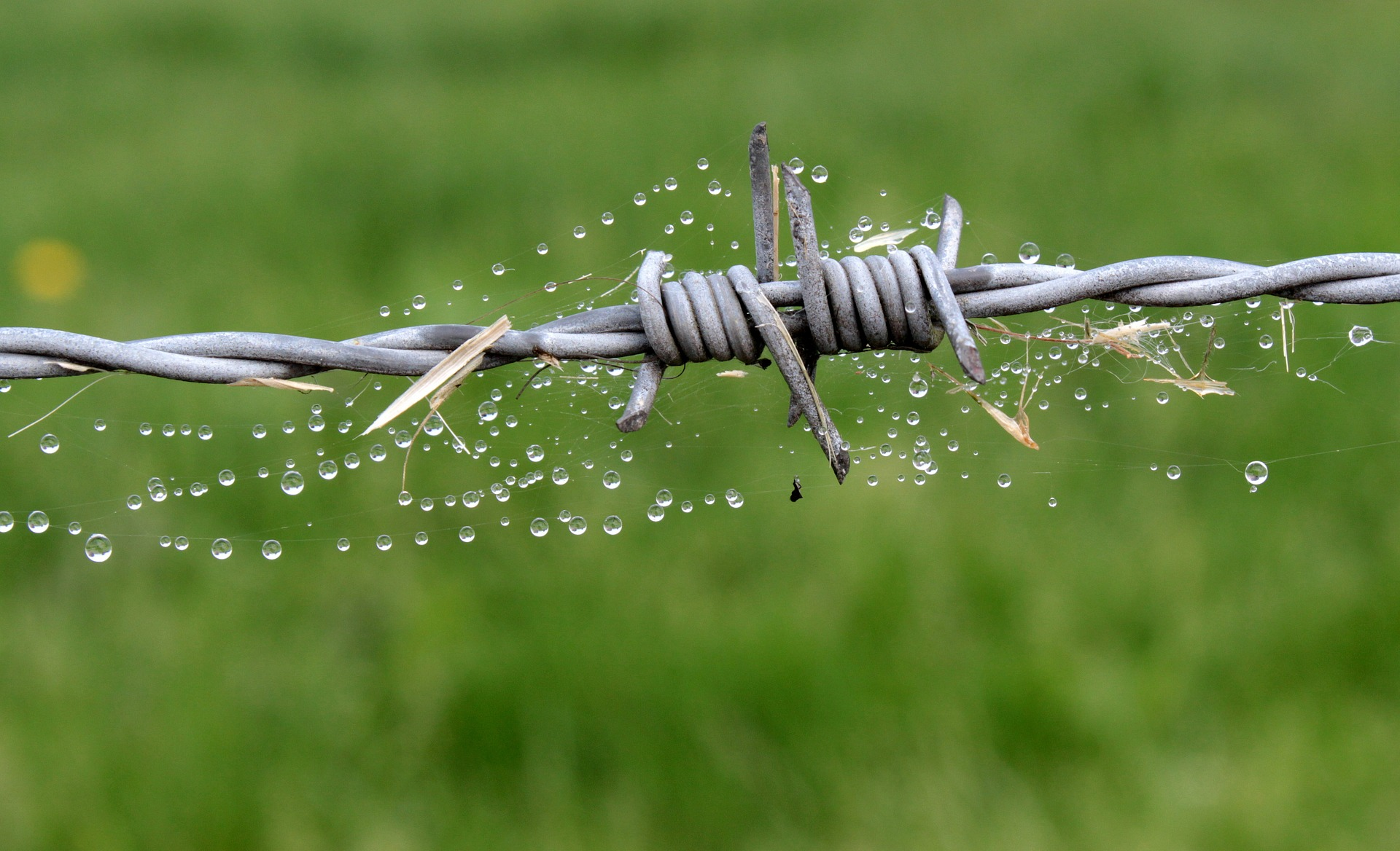 Barb Wire Fence, Object, Spiderweb, Wire, Metallic, HQ Photo
