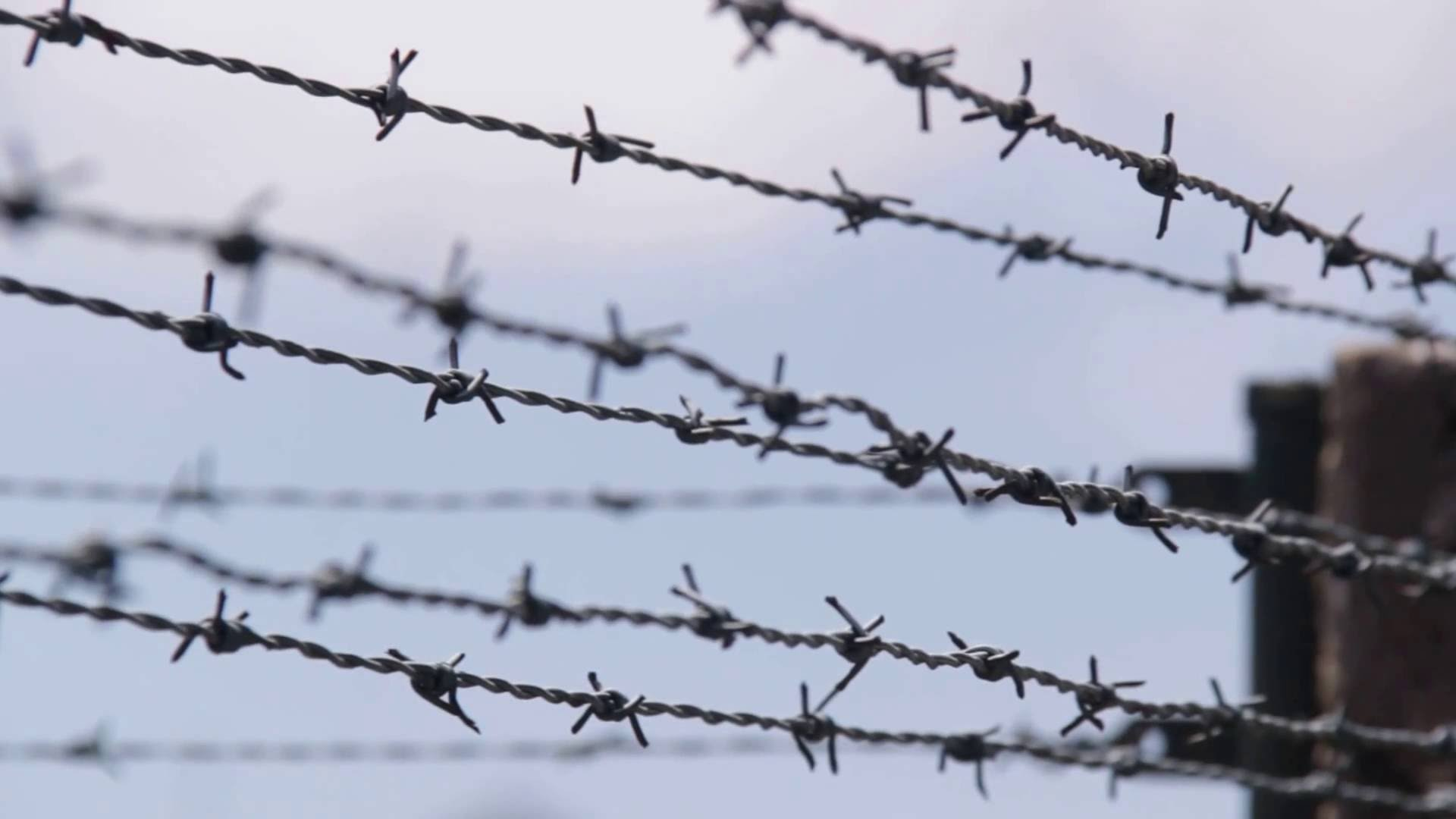 Barbed Wire Group (54+)