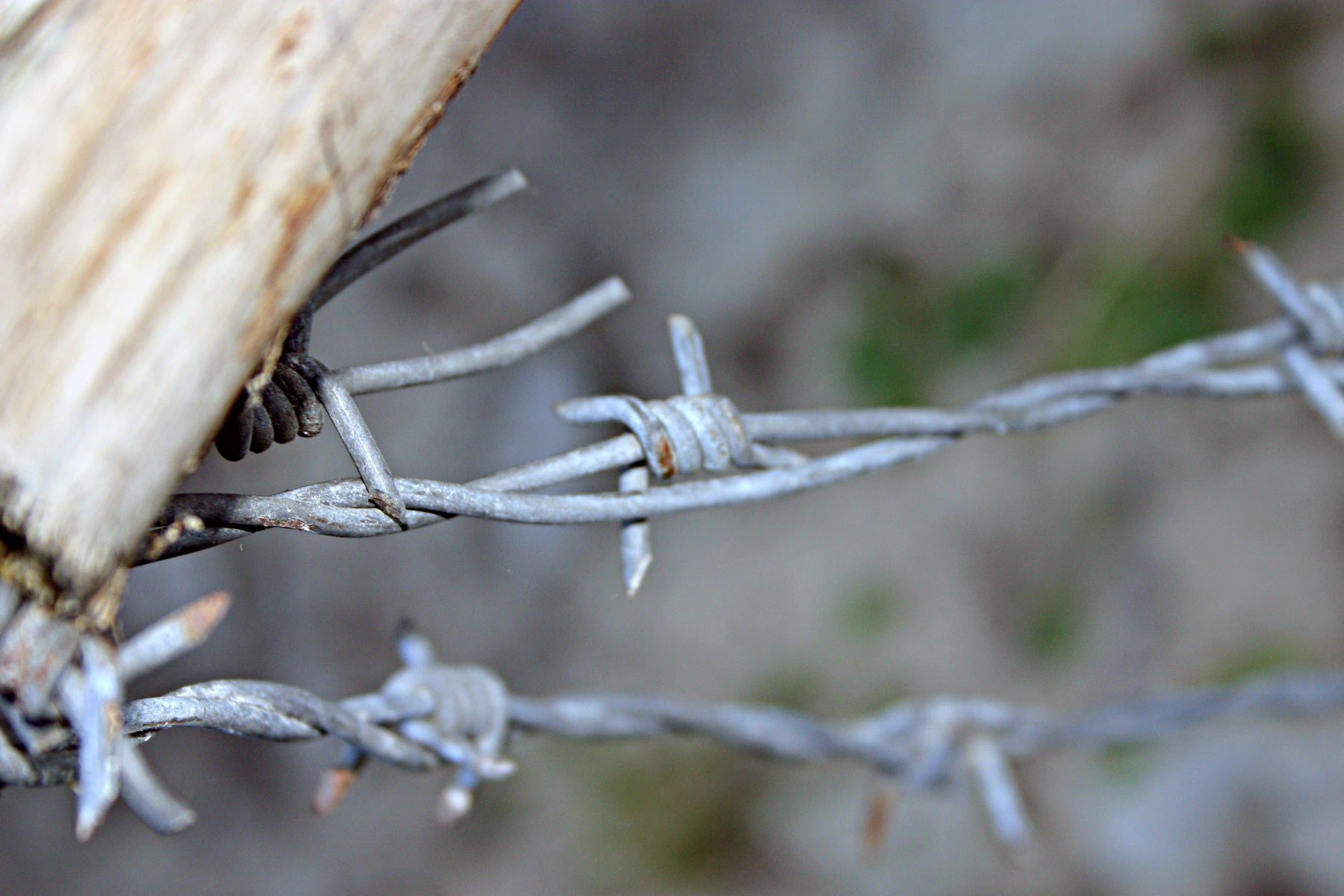 Free photo: Barbed wire closeup - Spikes, Sharp, Twisted - Free ...