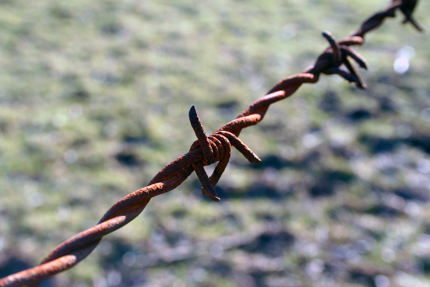 Free photo: Barbed wire detail - spikey, stop, wire - Non-Commercial ...