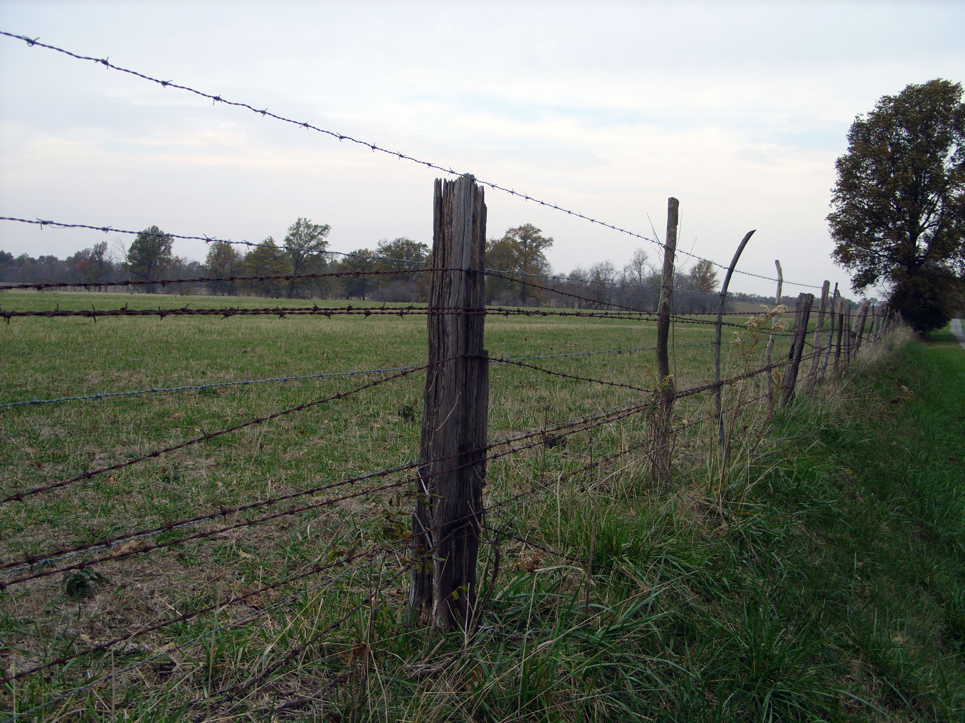 Free photo: Barbed wire fence - Nature, Wire, Landscape - Free ...