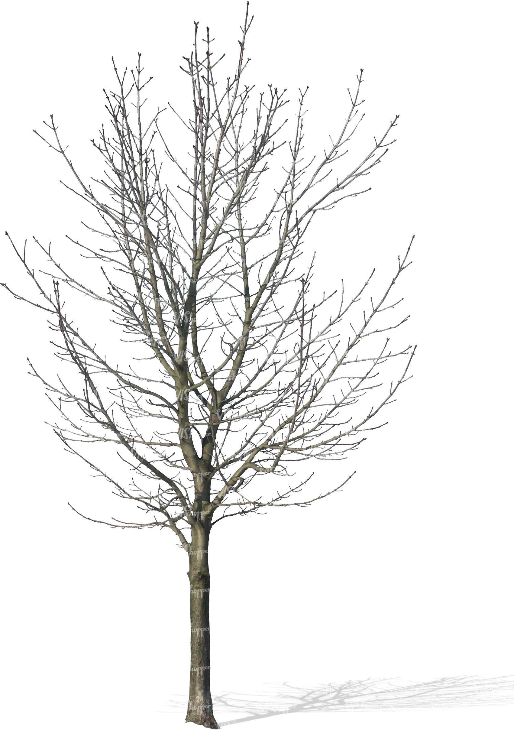 cut out bare tree - cut out trees and plants - VIShopper