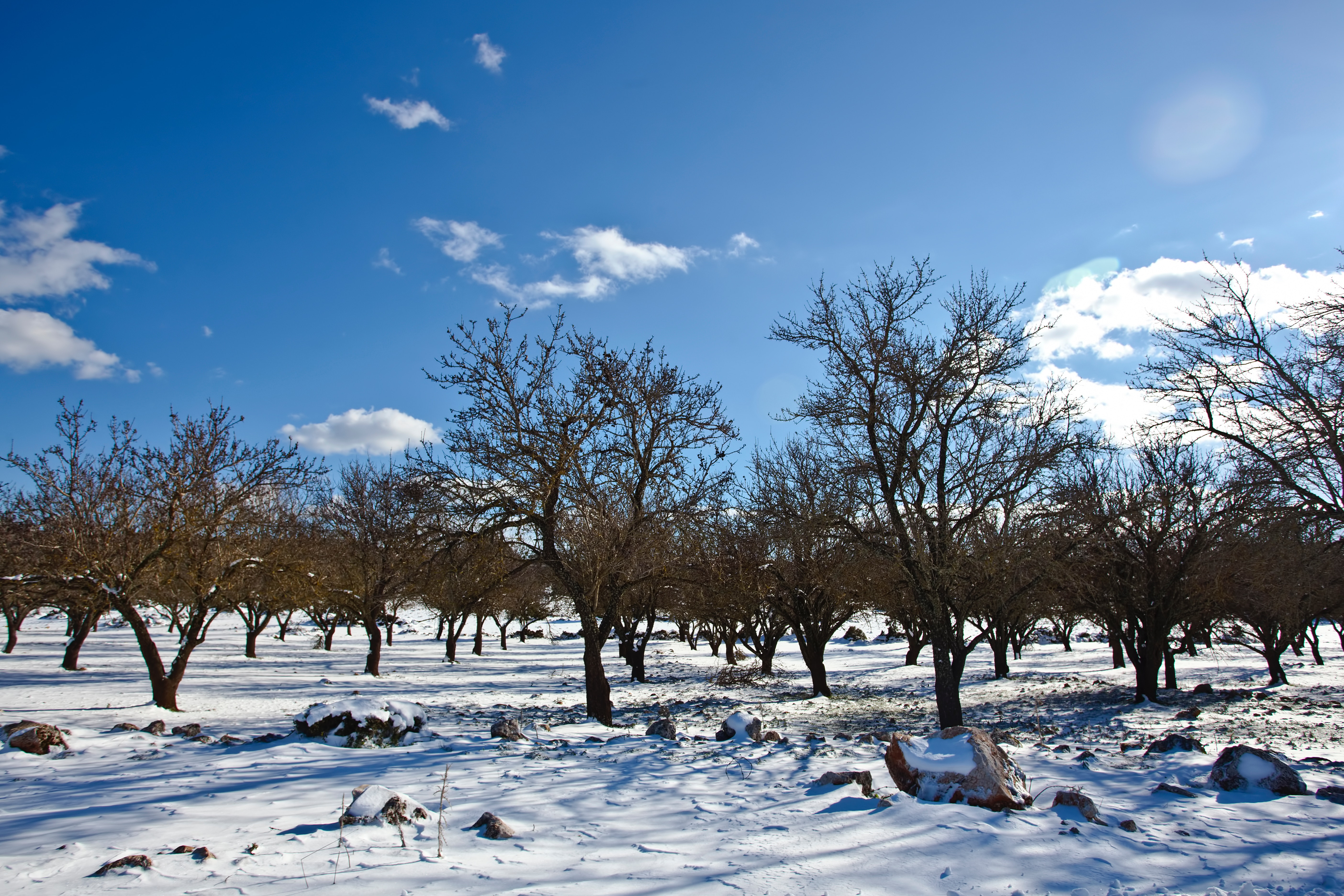 Bare Trees over Snow Ground Under Blue Cloudy Sky, Branches, Rocks, Winter landscape, Winter, HQ Photo