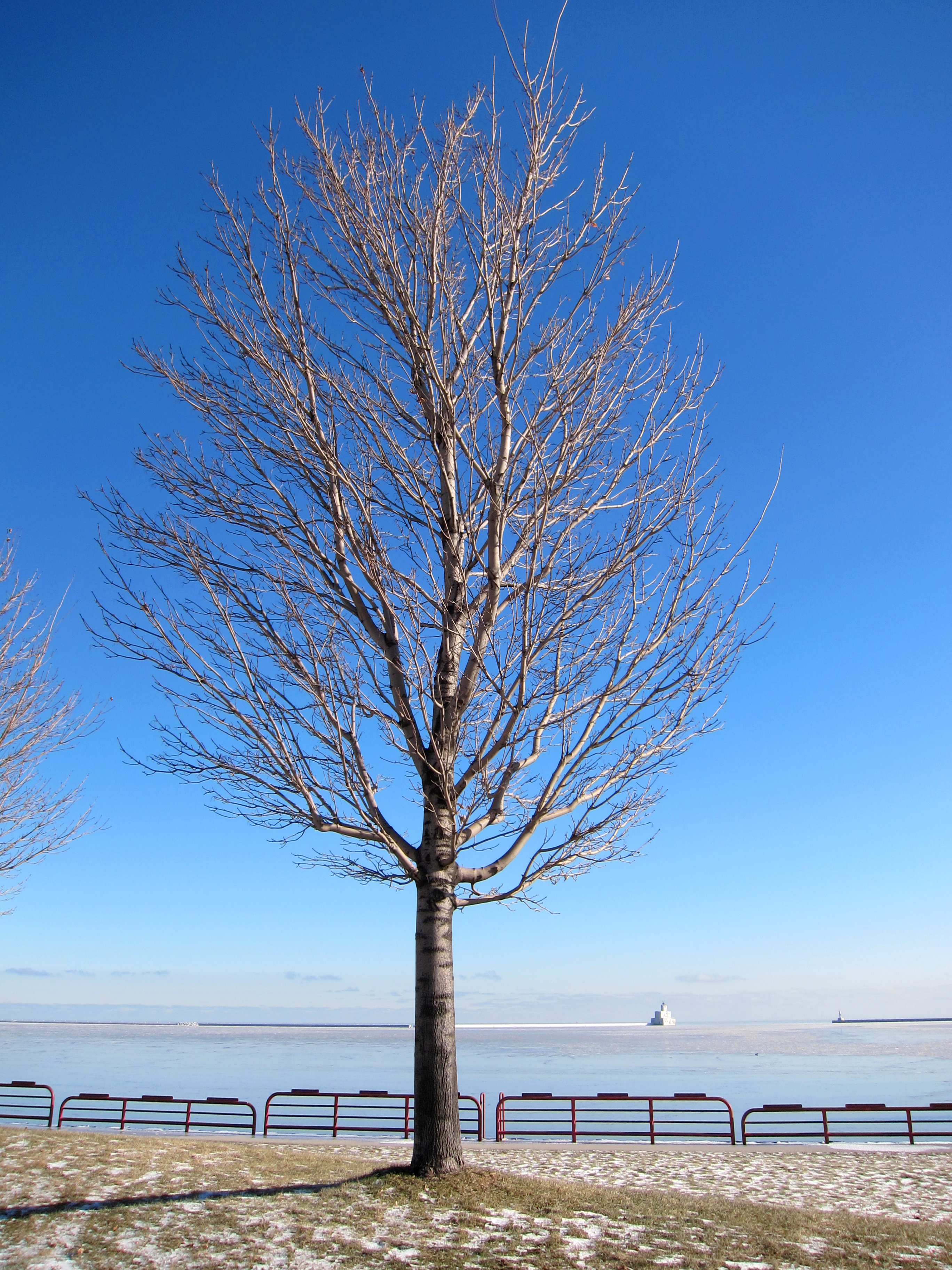 Bare Trees, Bare, Branches, Cold, Freeze, HQ Photo