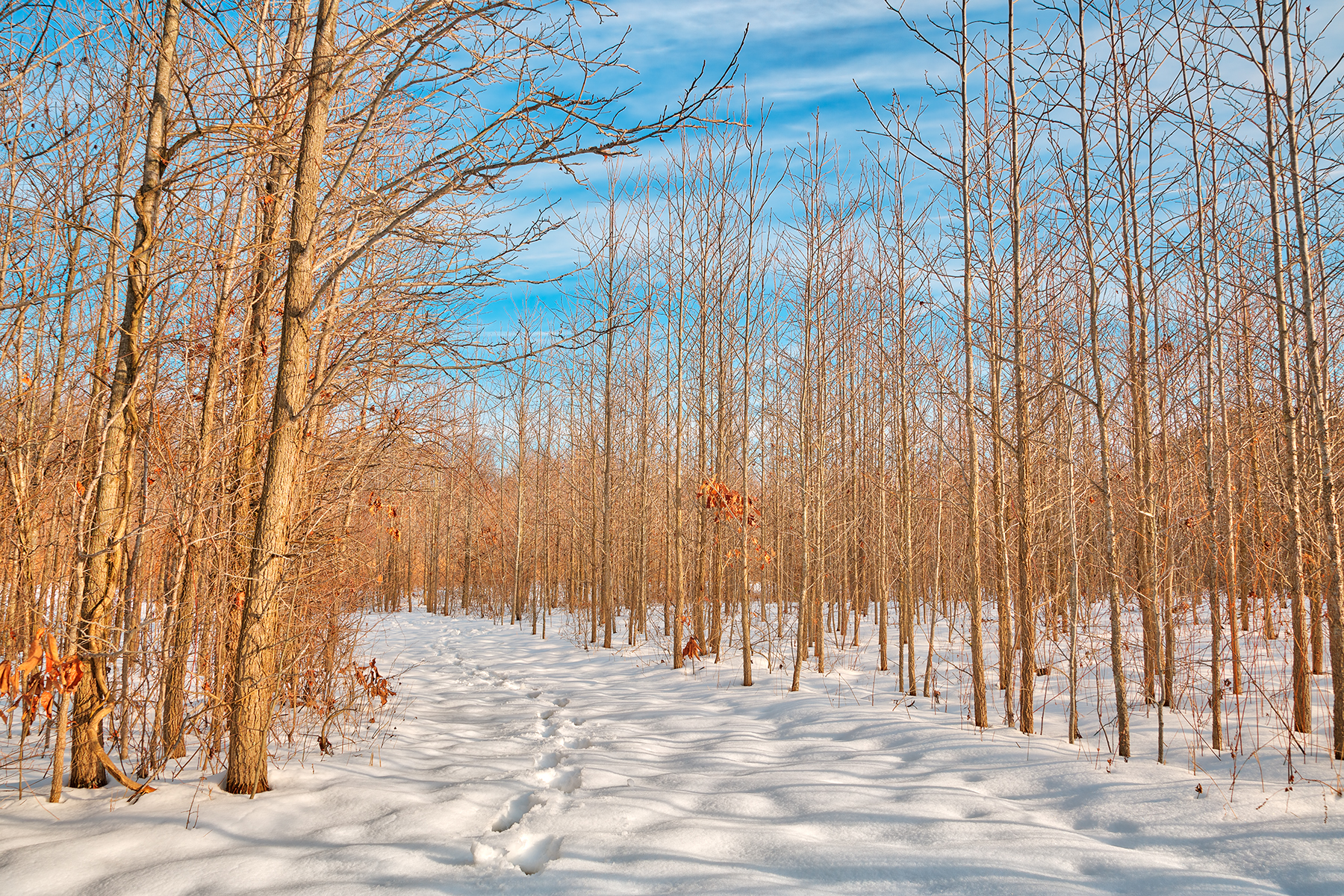 Bare winter tree trail - hdr photo