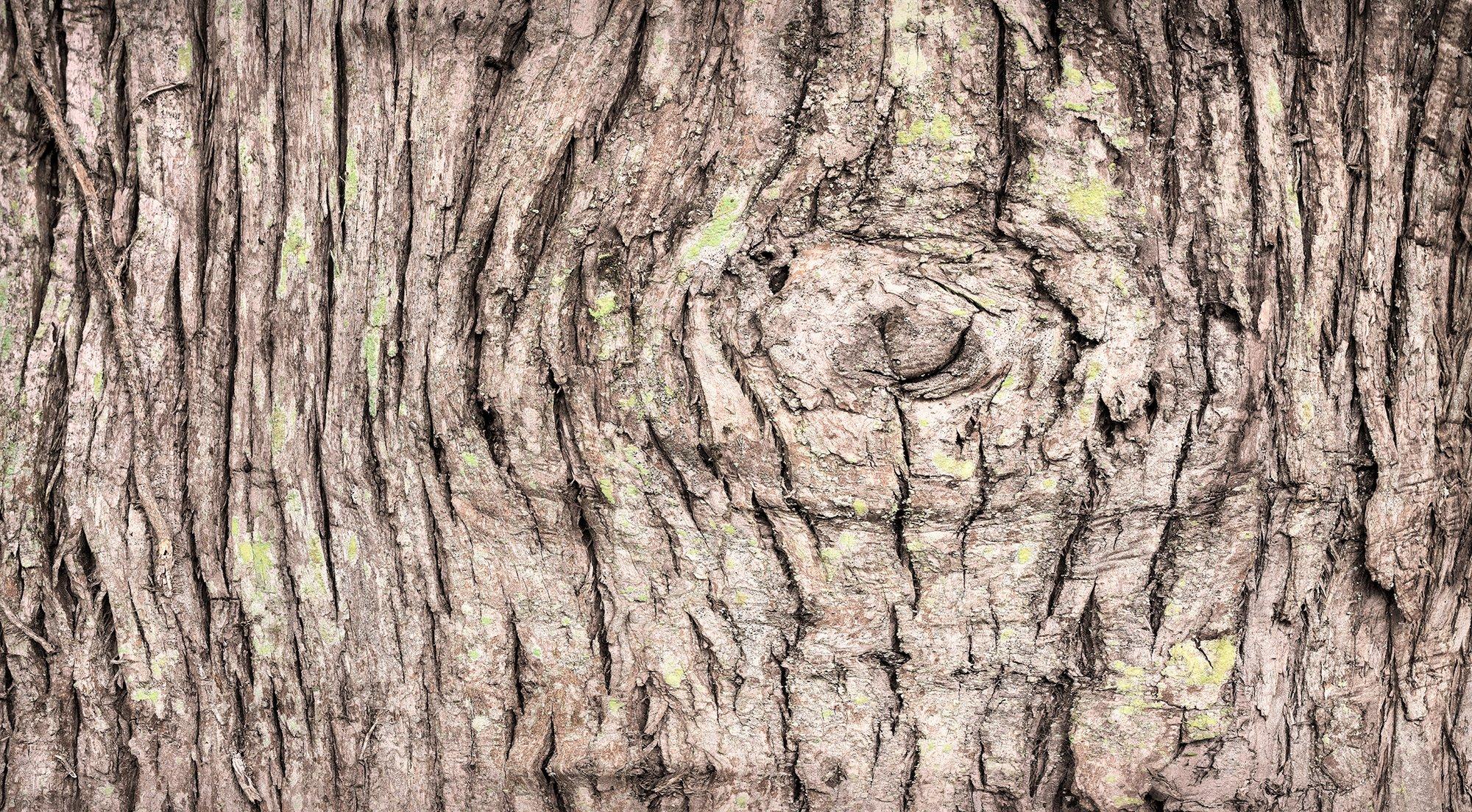 Bark photo