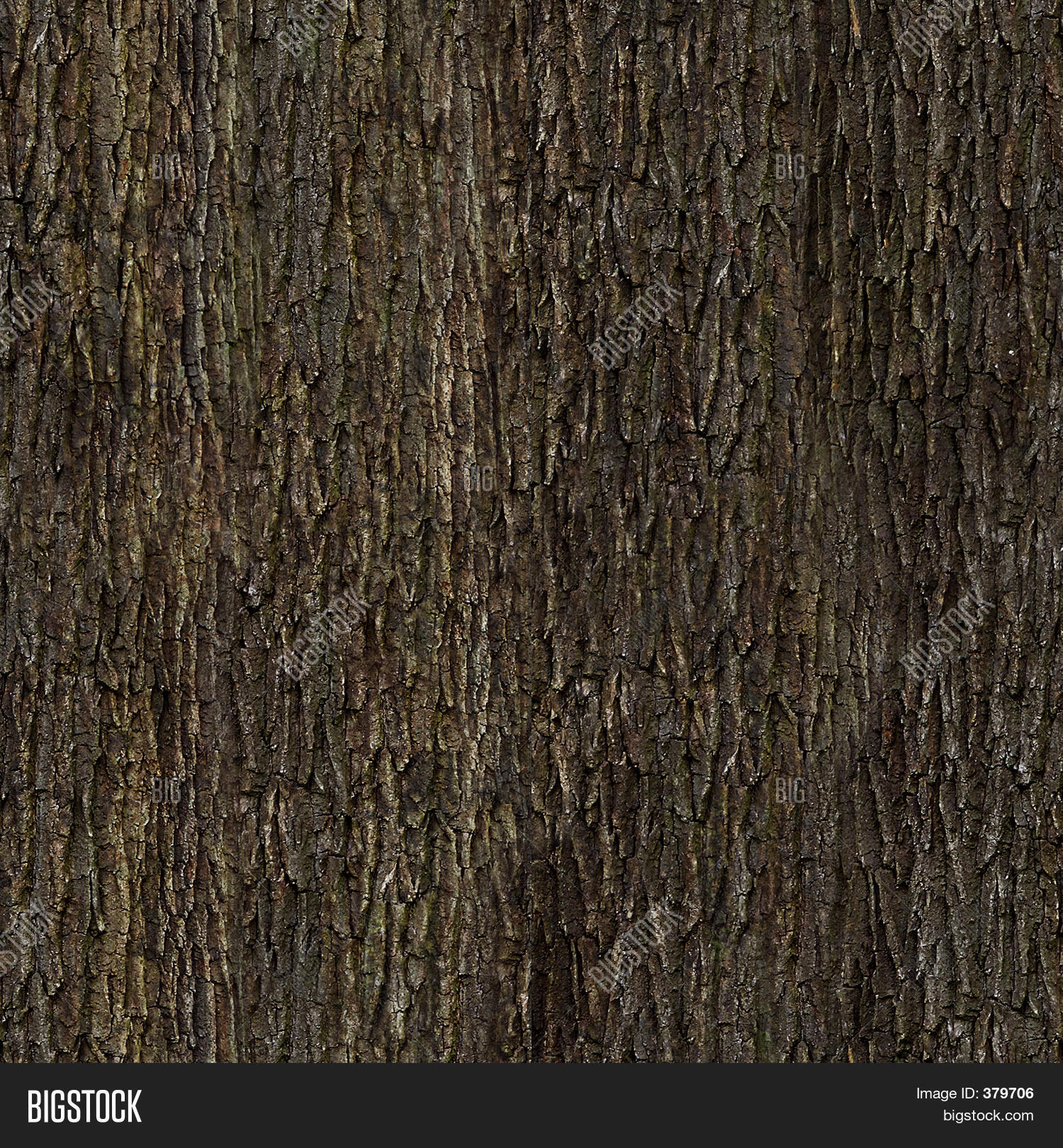 Oak Bark Texture Image & Photo | Bigstock
