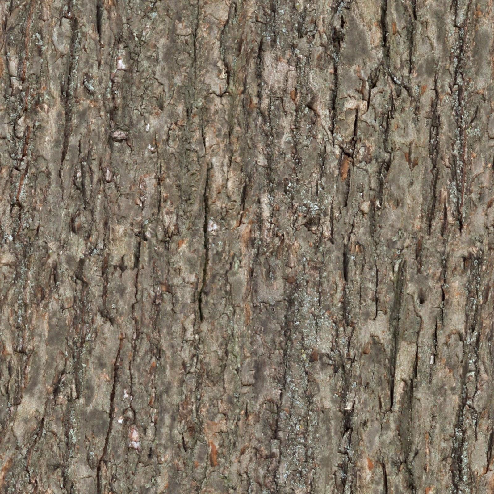 Wood bark photo