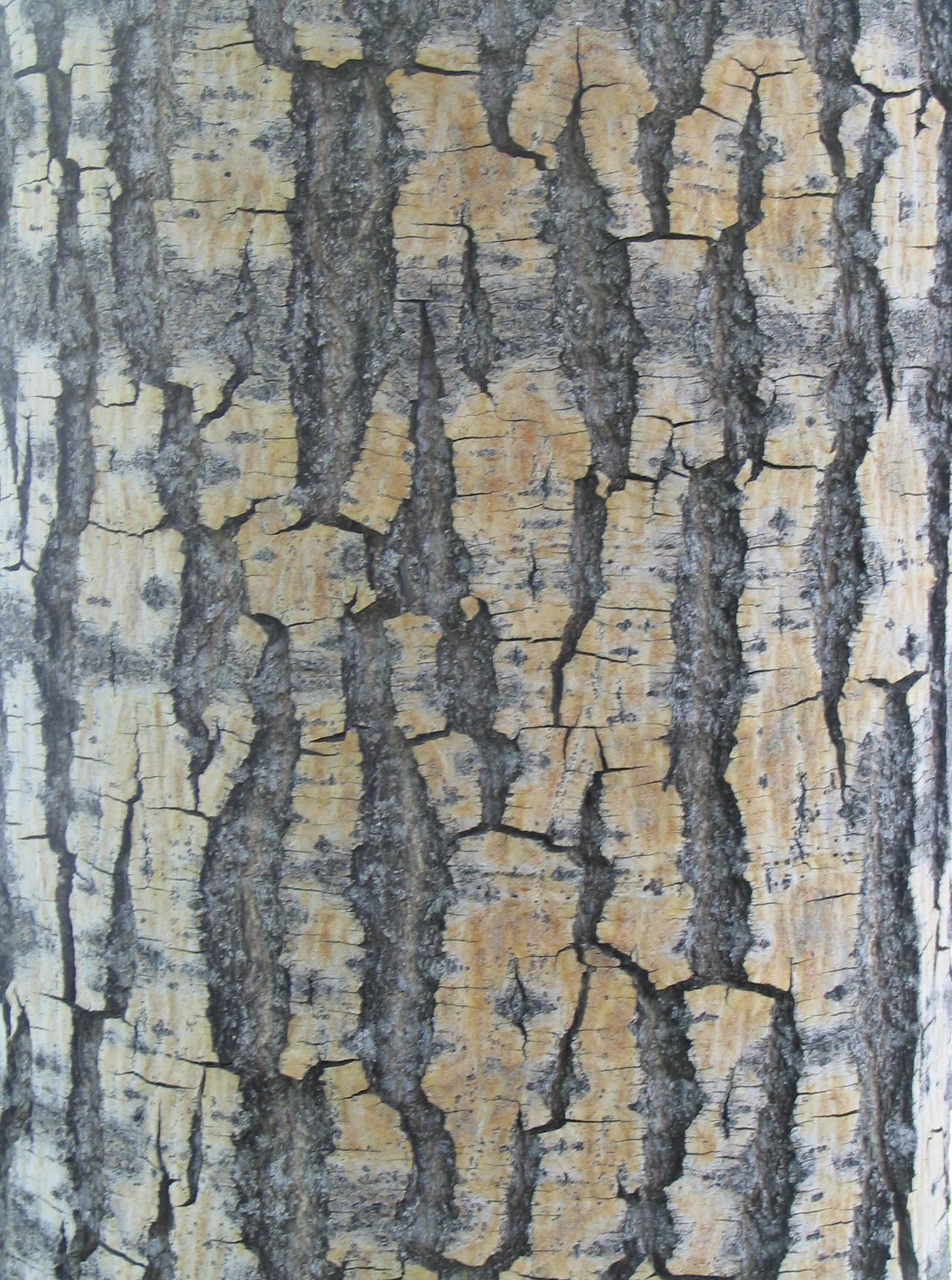 File:Bark texture wood.jpg - Wikimedia Commons