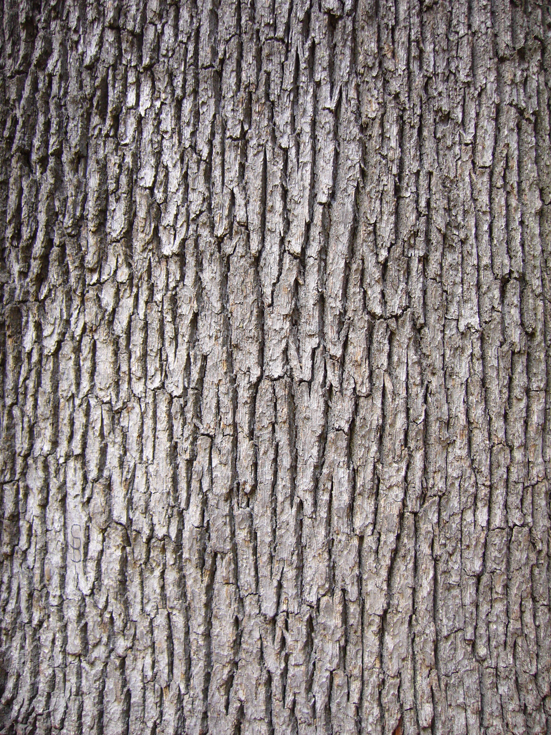 Tree bark photo