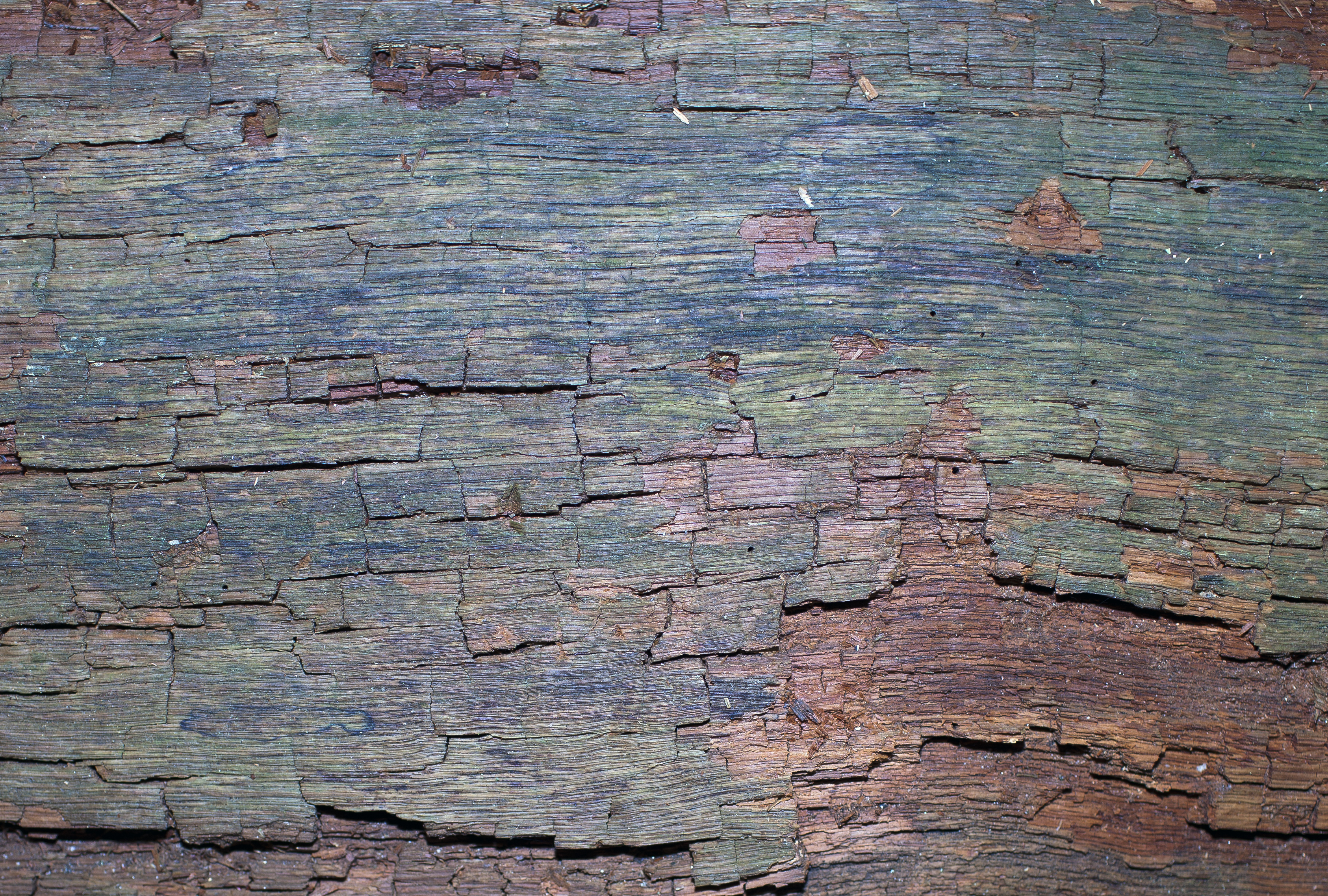 Bark Texture, Abstract, Nature, Wood, Trunk, HQ Photo