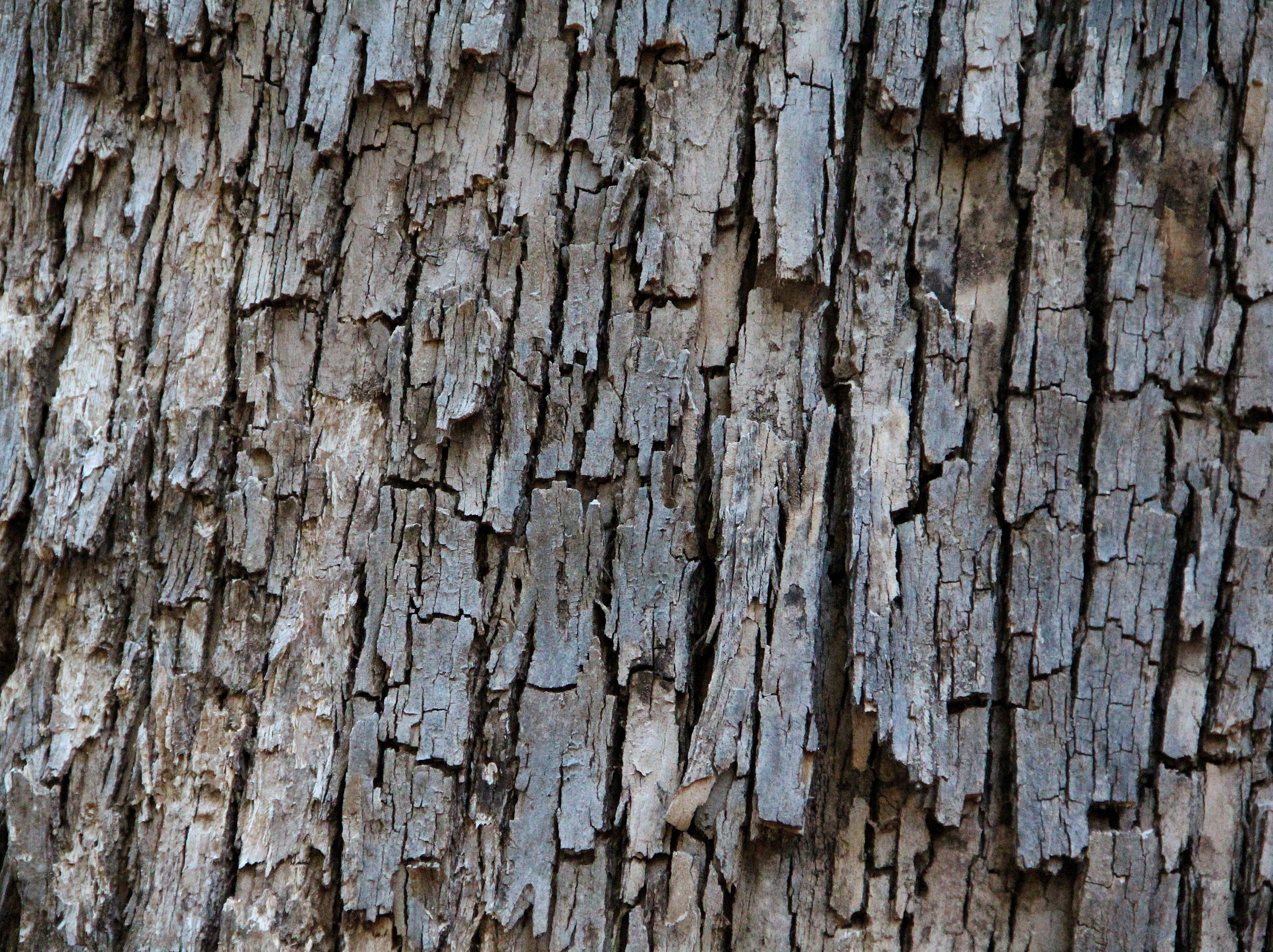 Wood bark texture photo