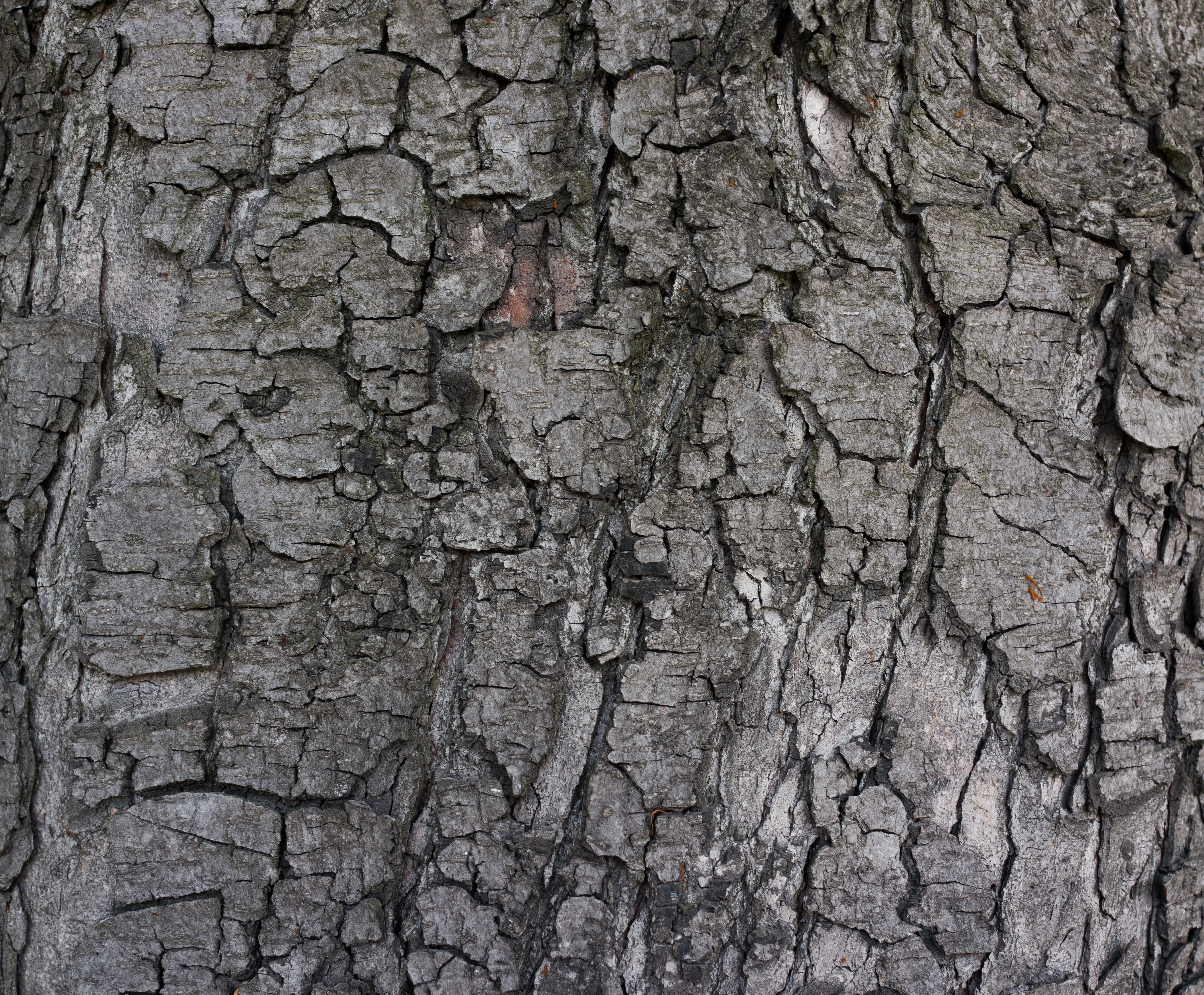 Grey Tree Bark Texture