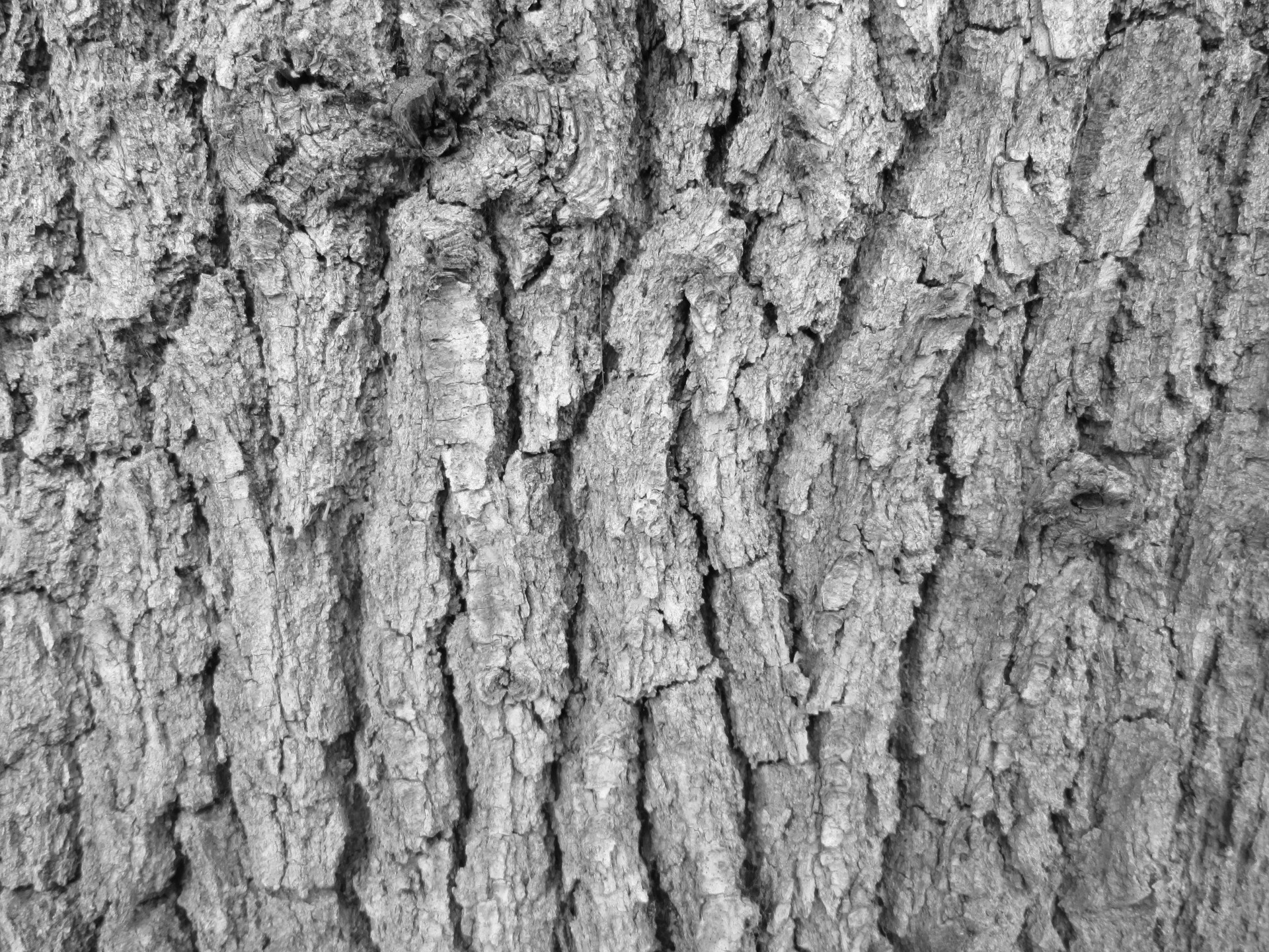 Tree Bark Texture 14 Free Stock Photo - Public Domain Pictures
