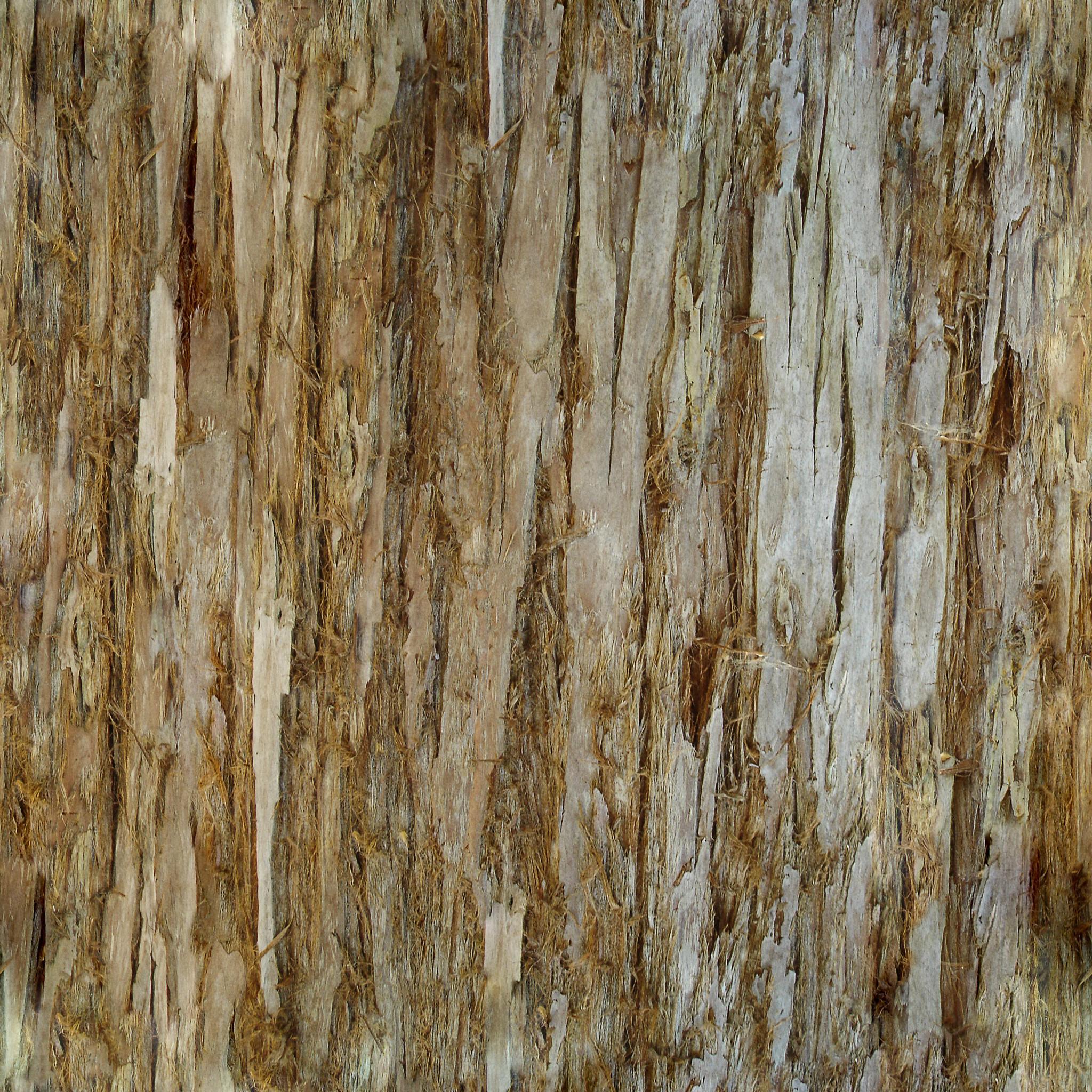 Bark texture photo