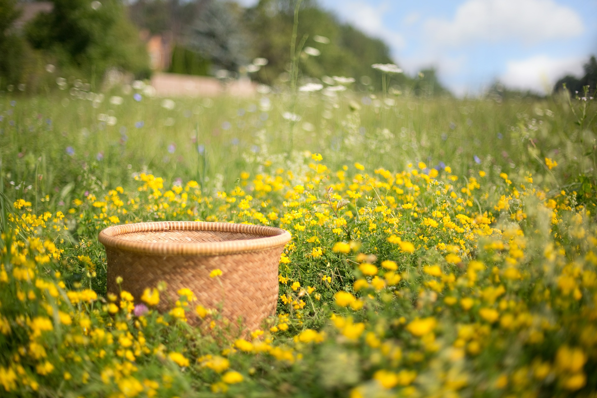 Basket in the Field, Object, Wild, Wooden, Garden, HQ Photo