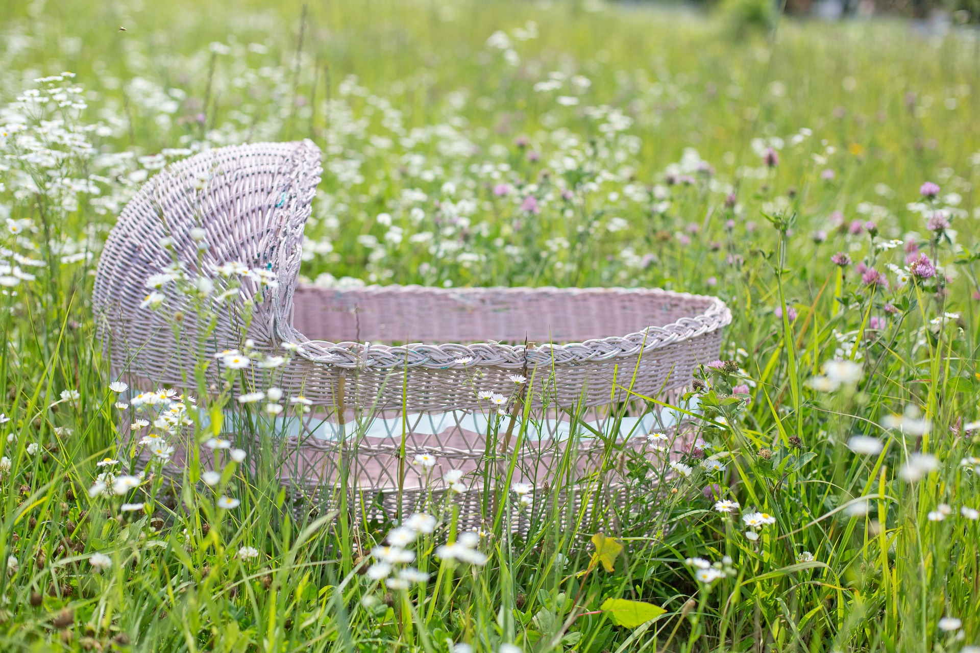 Bassinet in the Garden, Baby, Bassinet, Bed, Blooming, HQ Photo