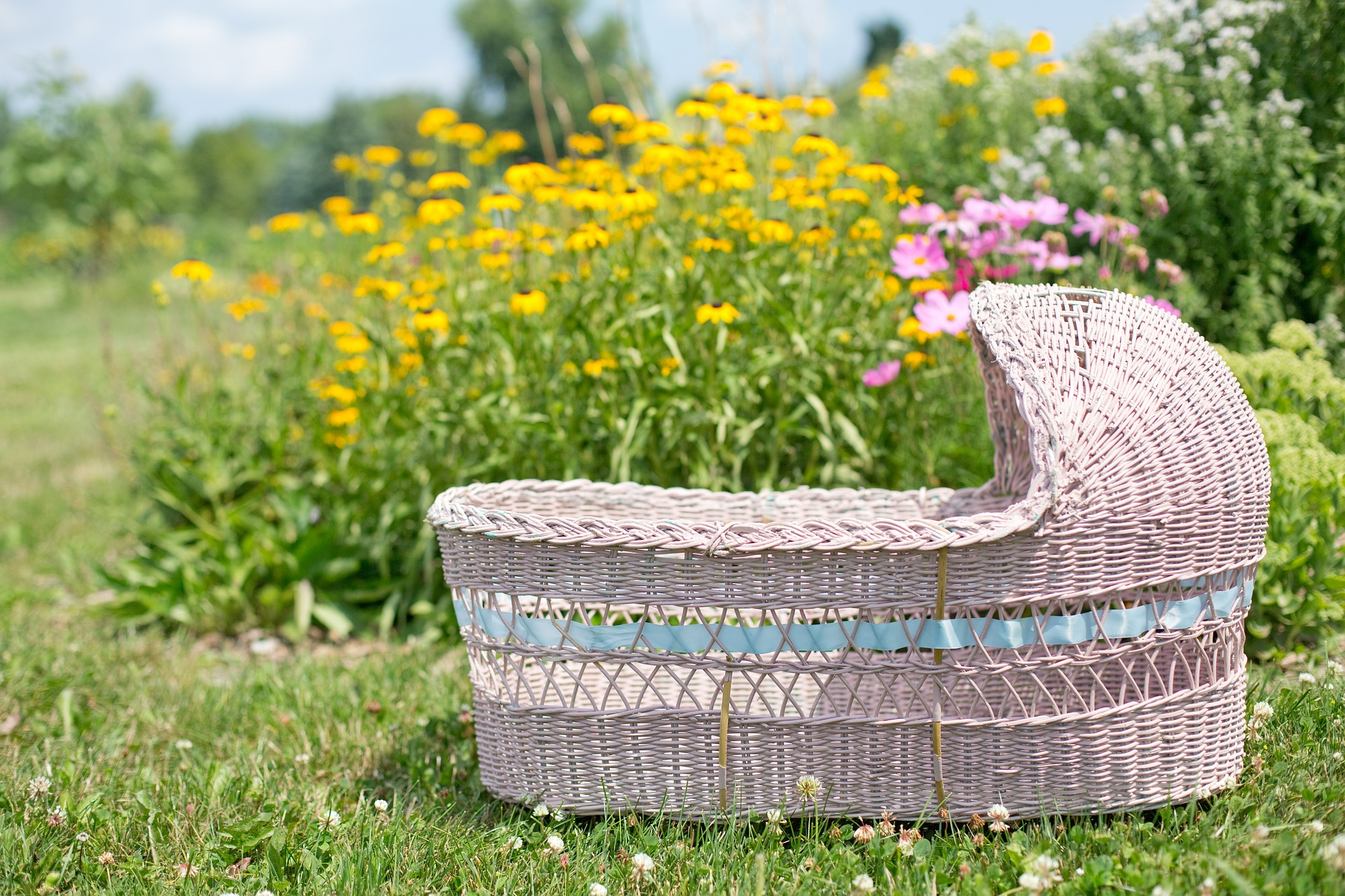 Bassinet in the Garden, Garden, Object, Nature, Flower, HQ Photo