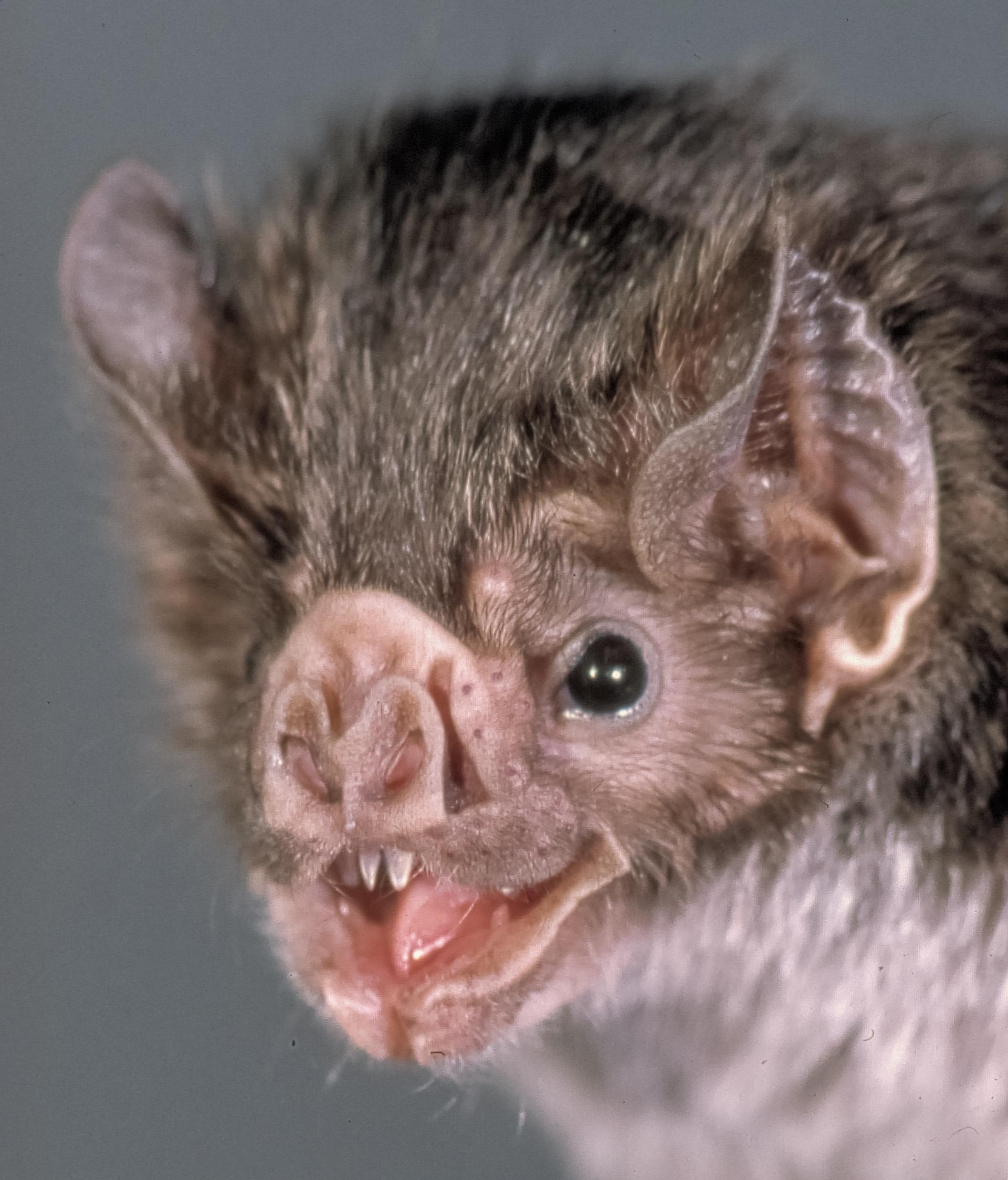 Bat closeup photo