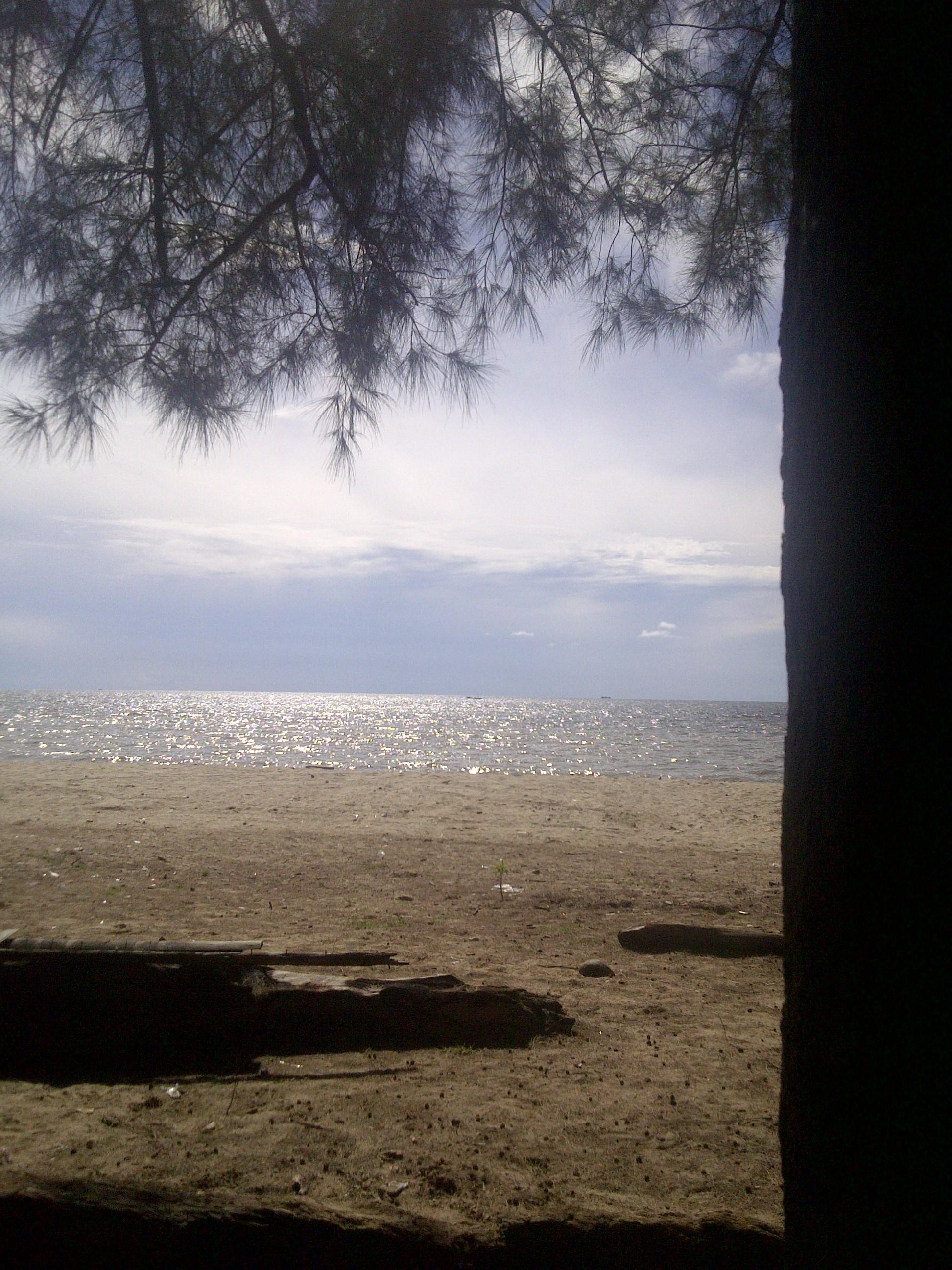 Beach, Sand, Sea, Tree, HQ Photo