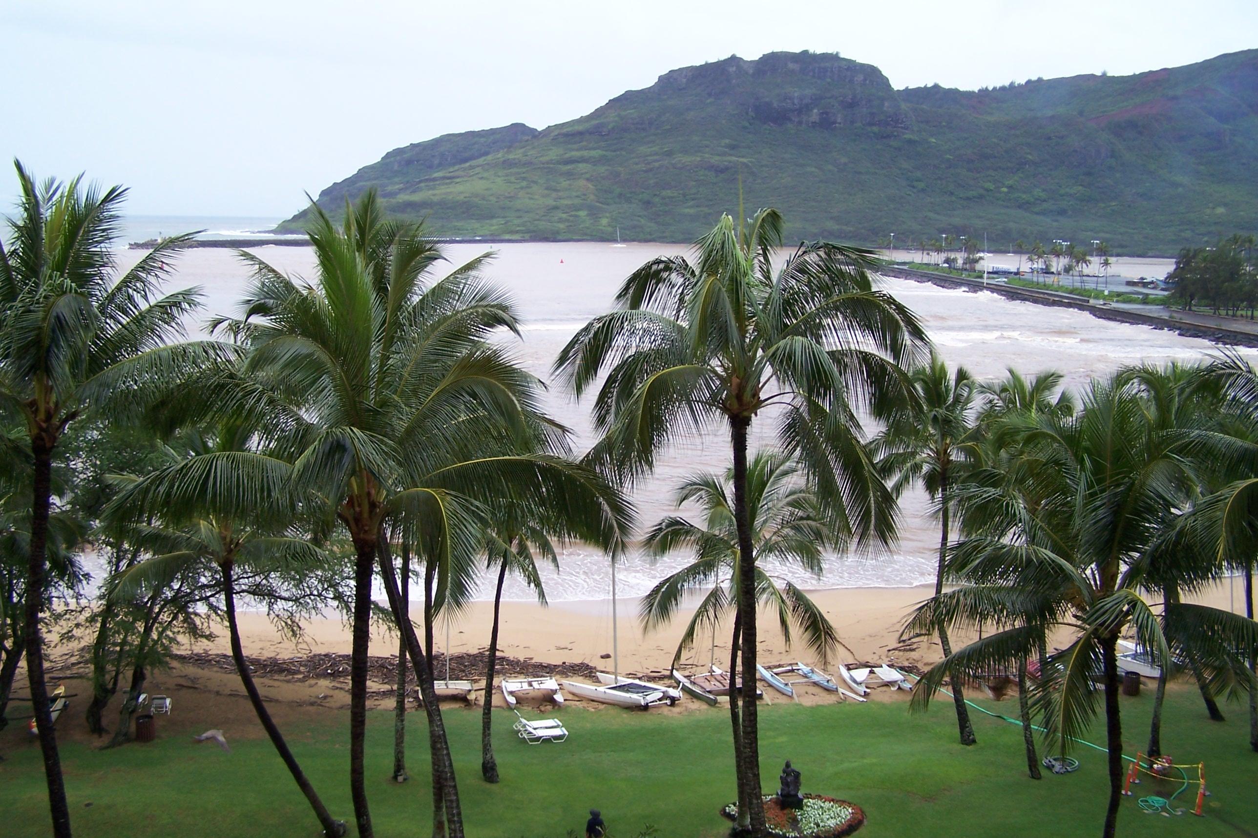 Beach after Storm, Beach, Boats, Driftwood, Palm, HQ Photo