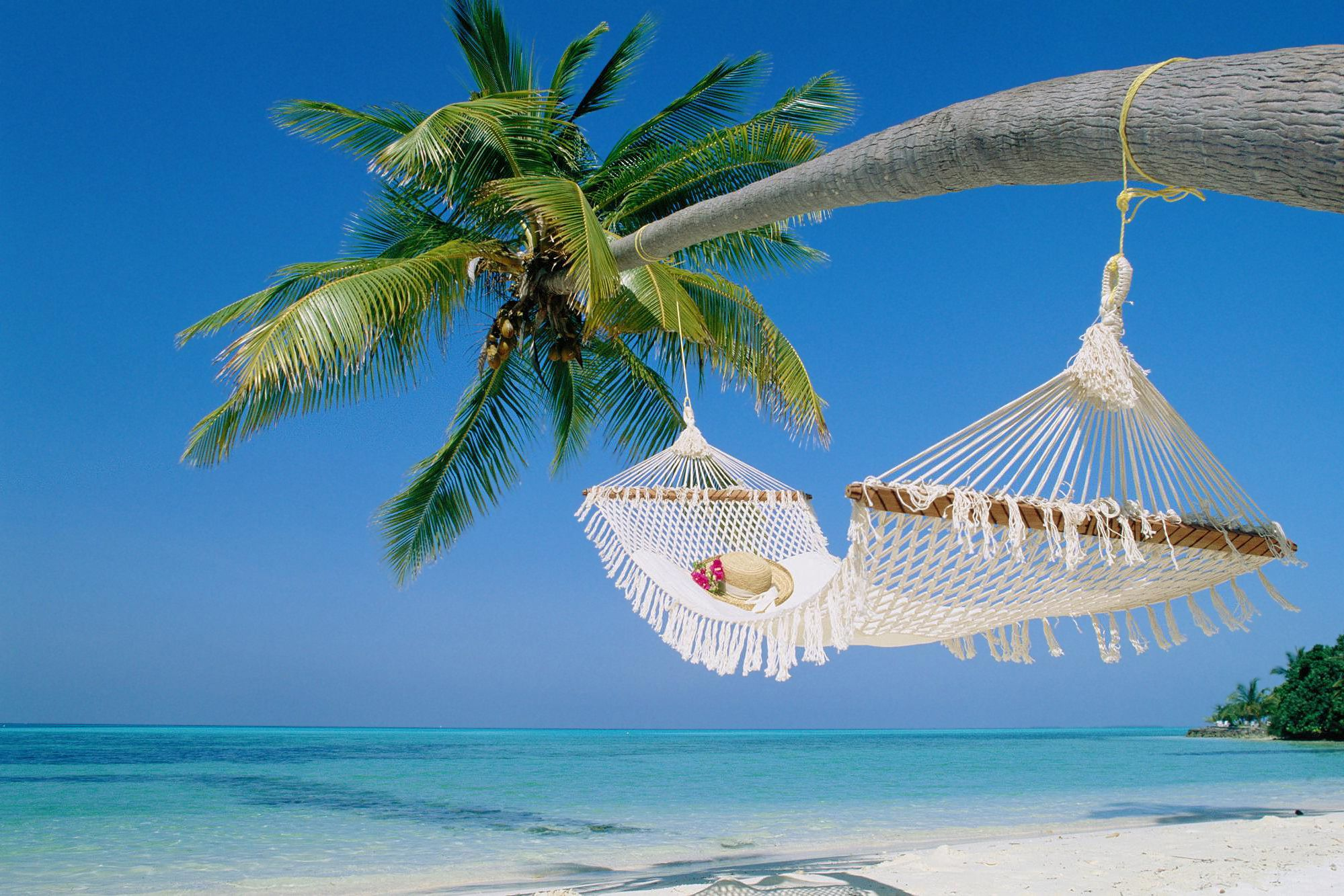 Tropical Beach Hammock Wallpaper Background 1 HD Wallpapers | Random ...
