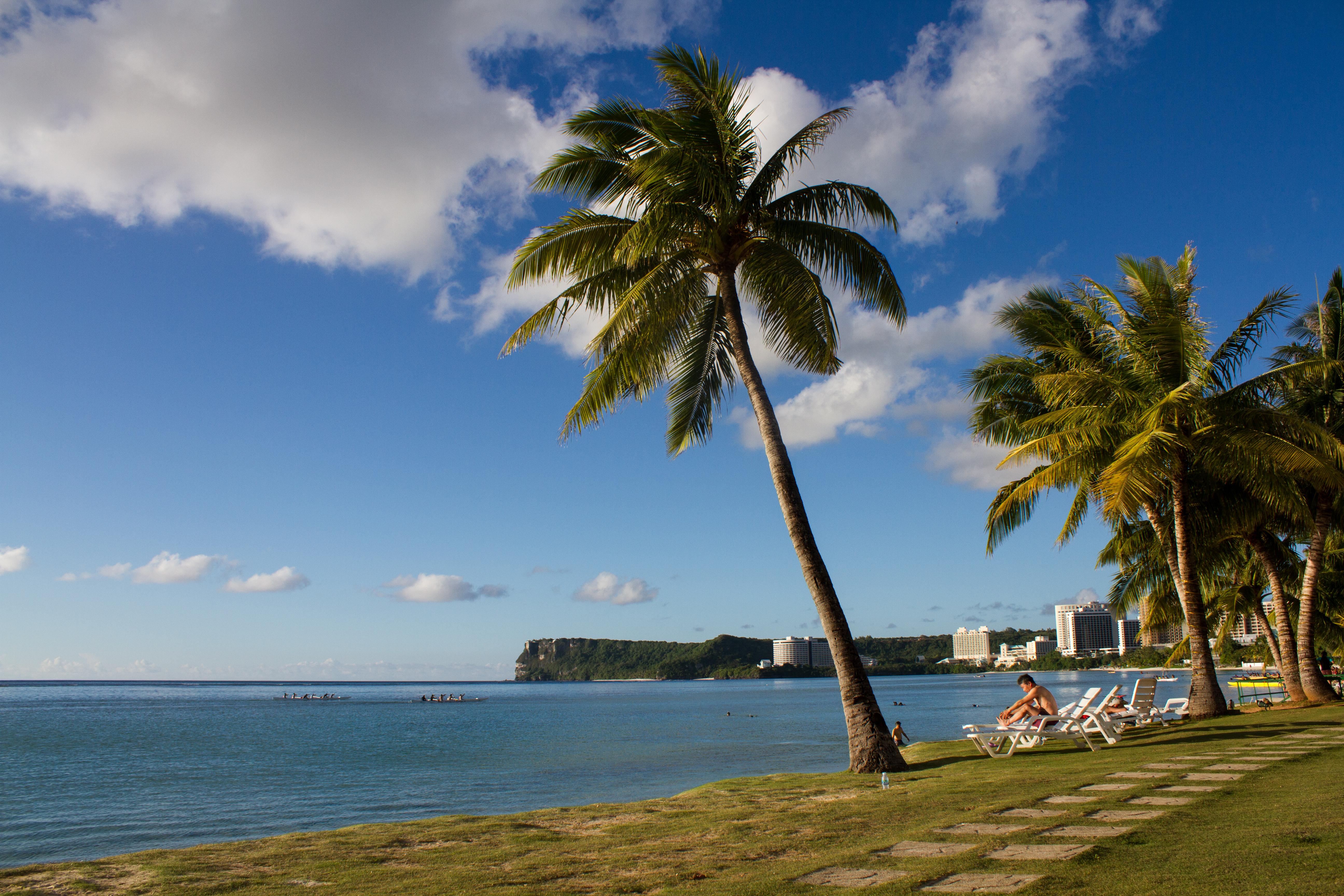 Beach of Fiesta Hotel, Beach, Landscape, Outdoor, Palm tree, HQ Photo