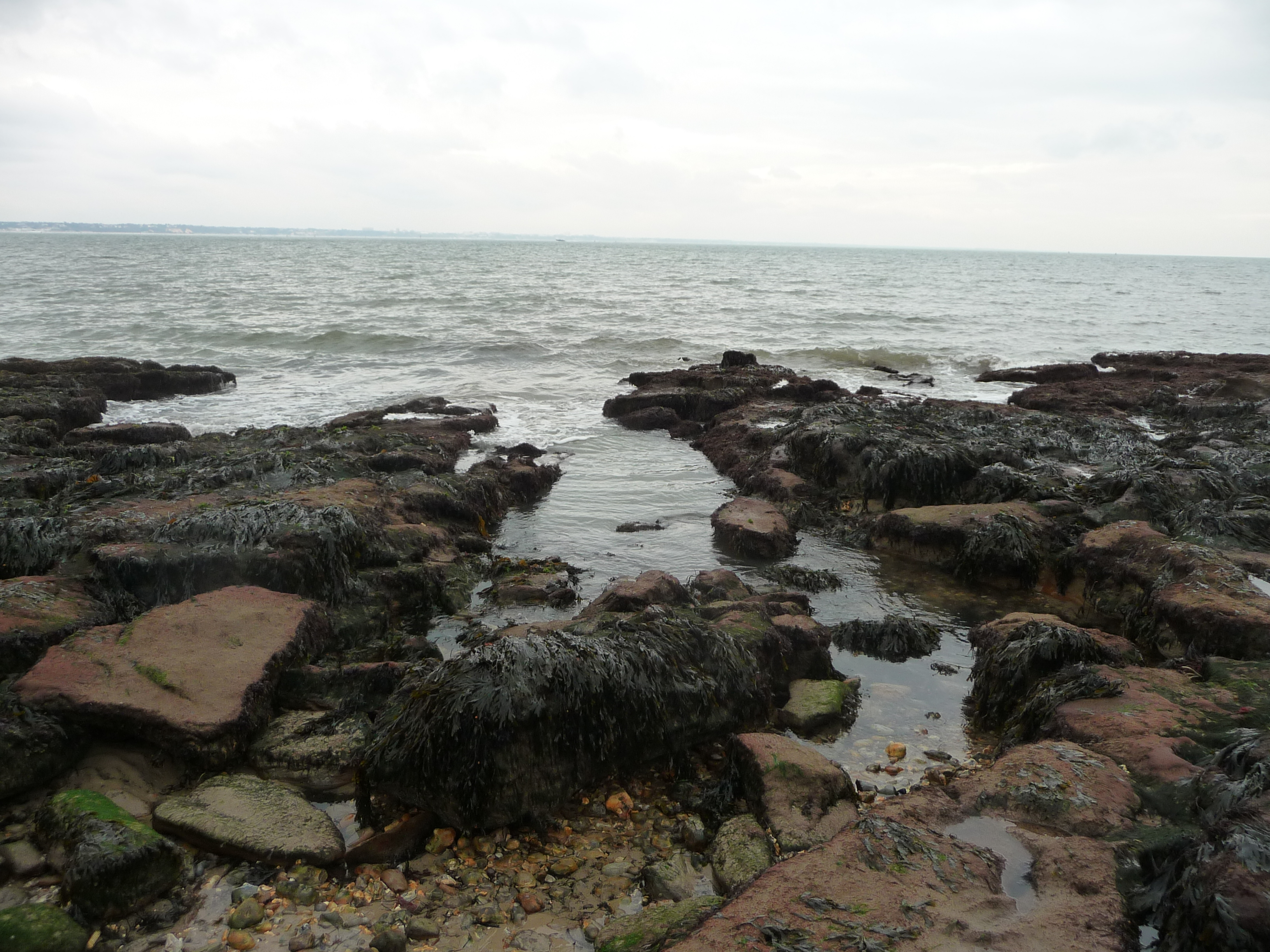 File:Studland Beach , Rocks and Seaweed - geograph.org.uk - 1711482 ...