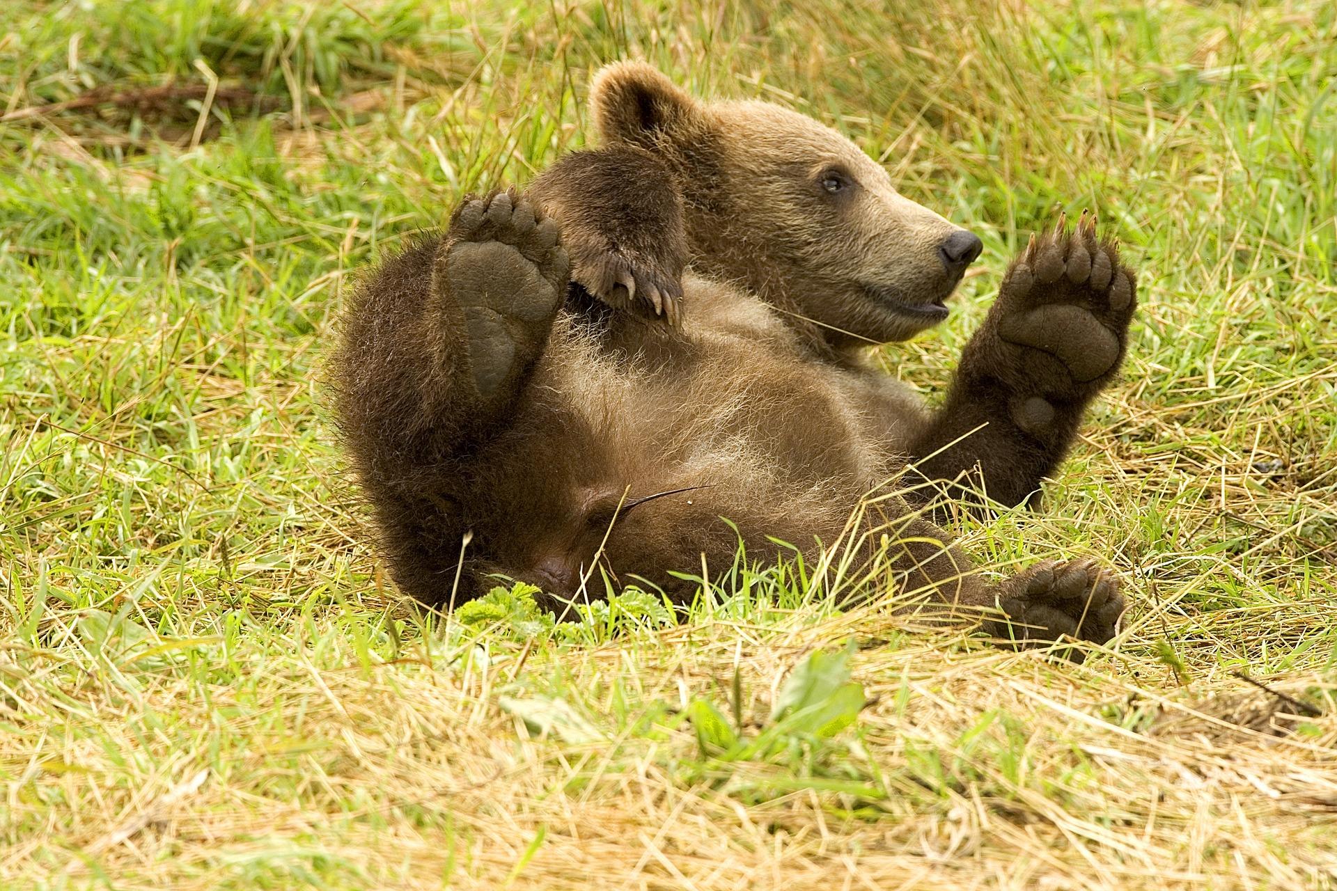 Chubby Gay Bear Galleries