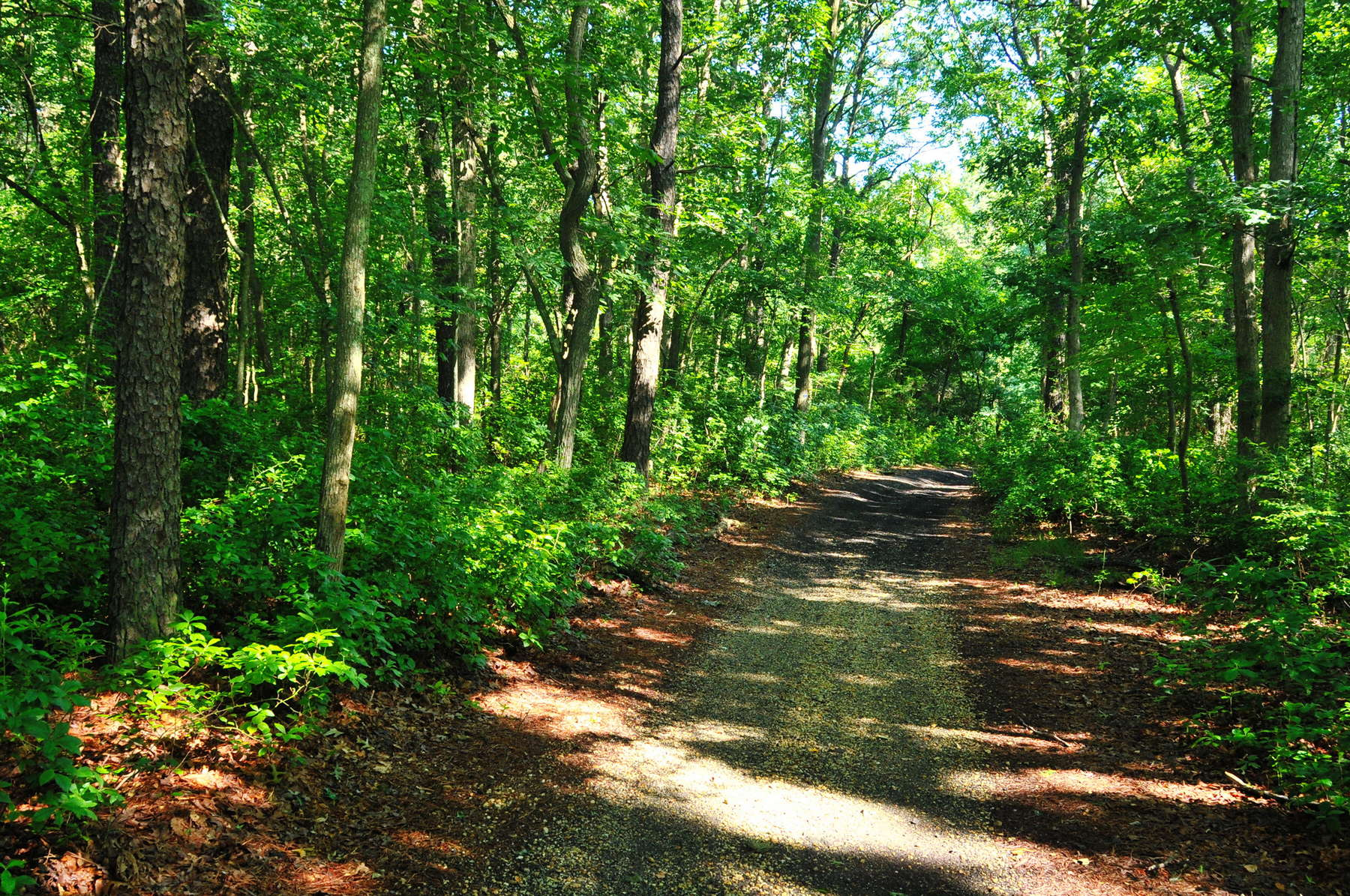 Bear Swamp Natural Area | 351- 399 Maxim Rd, Howell, NJ 07731 | Get ...