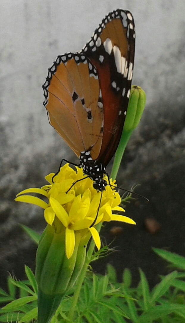 Beautiful butterfly photo
