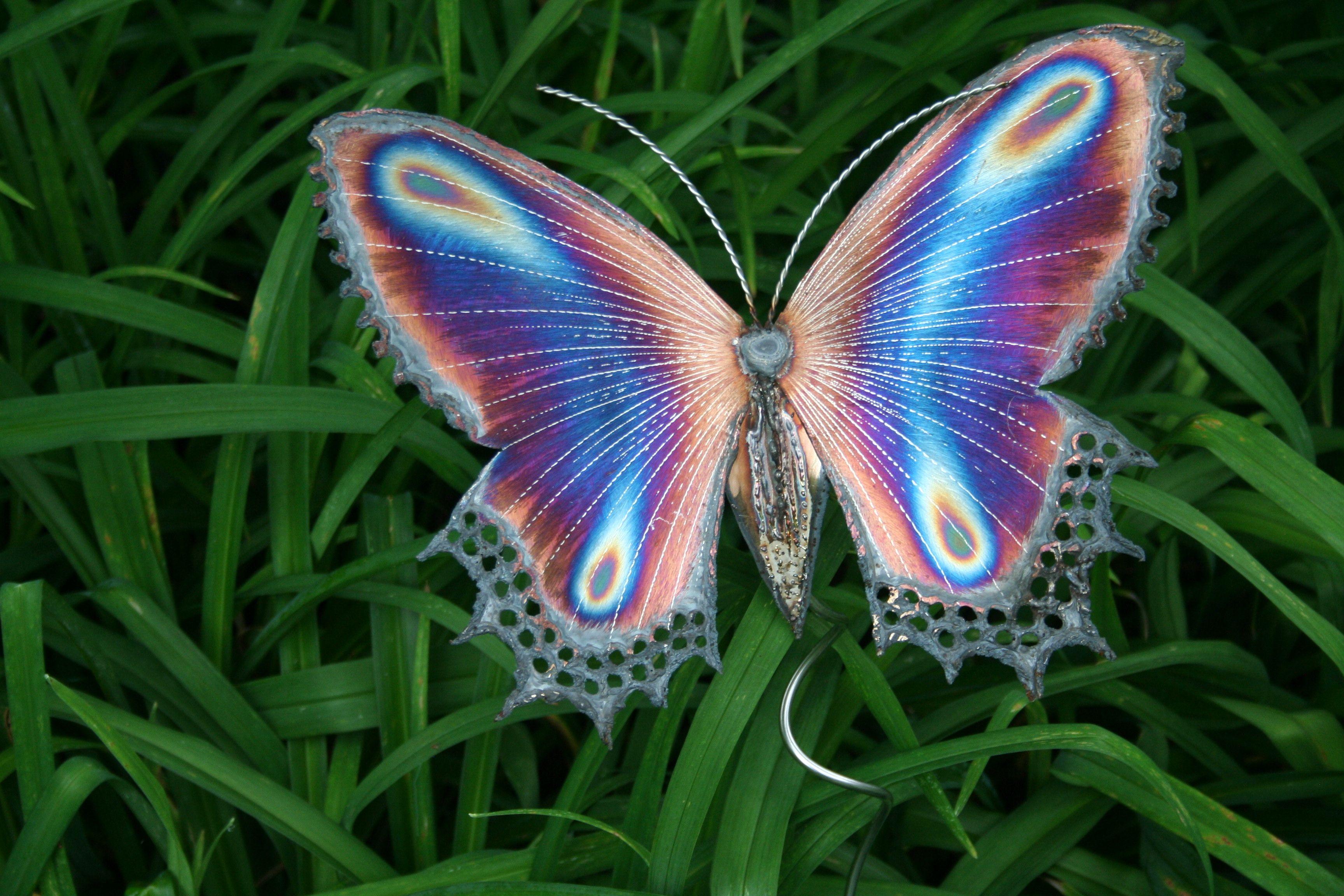 Butterfly Gallery: Free Photo: Beautiful Butterfly