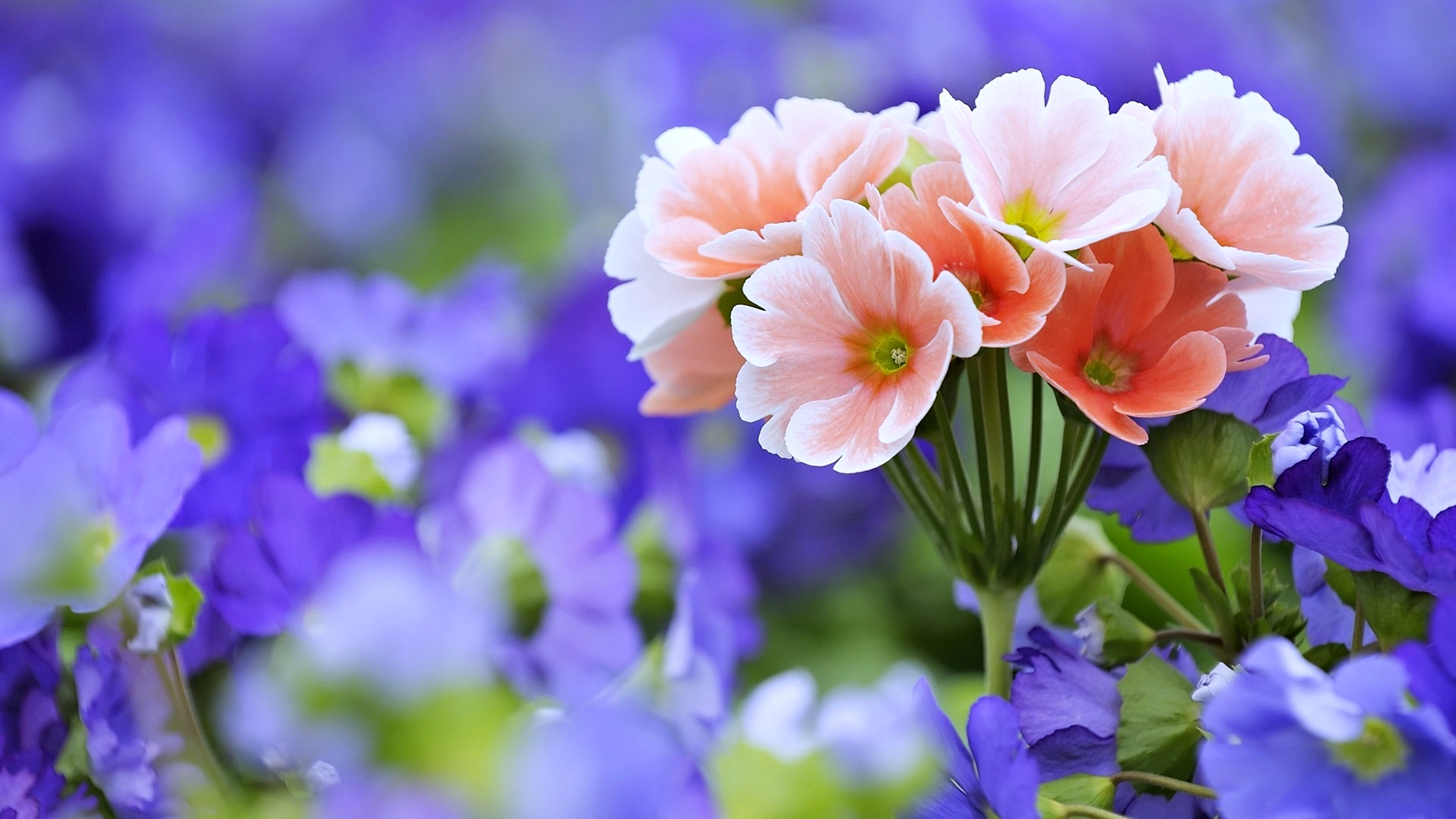 Free Photo Beautiful Flowers Love Lovely Natural Free