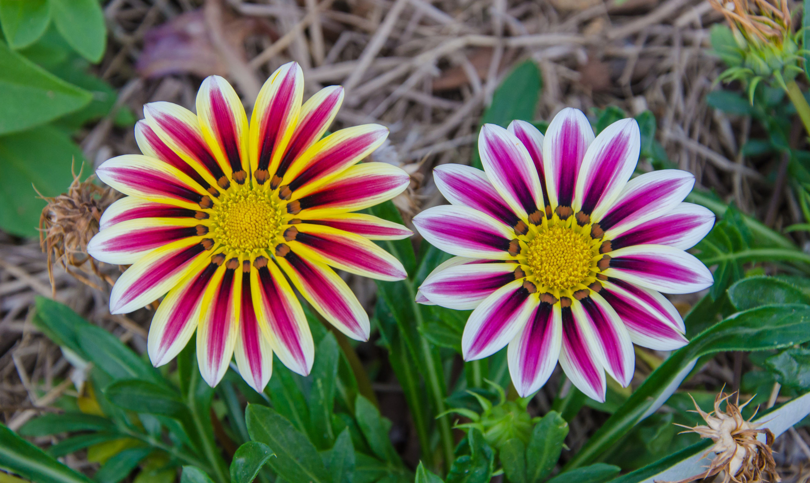 10 Most Beautiful Flowers In The World Flower Meaning Simple Images ...