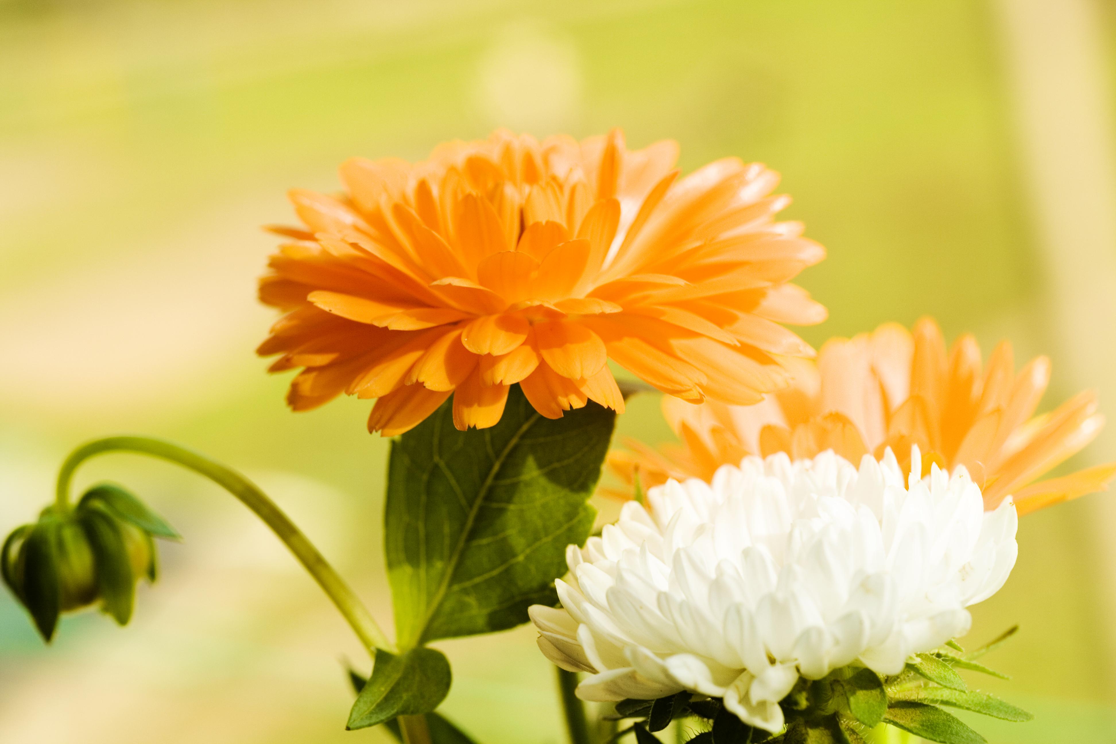 beautiful flowers, Beautiful, Naturally, Green, Growing, HQ Photo