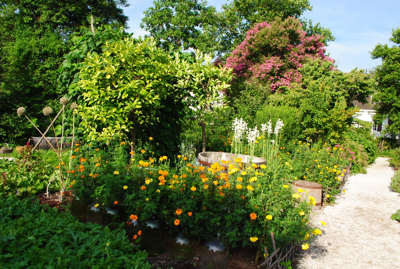 Free photo: Beautiful Garden - Blooming, Flower, Fragrance ...