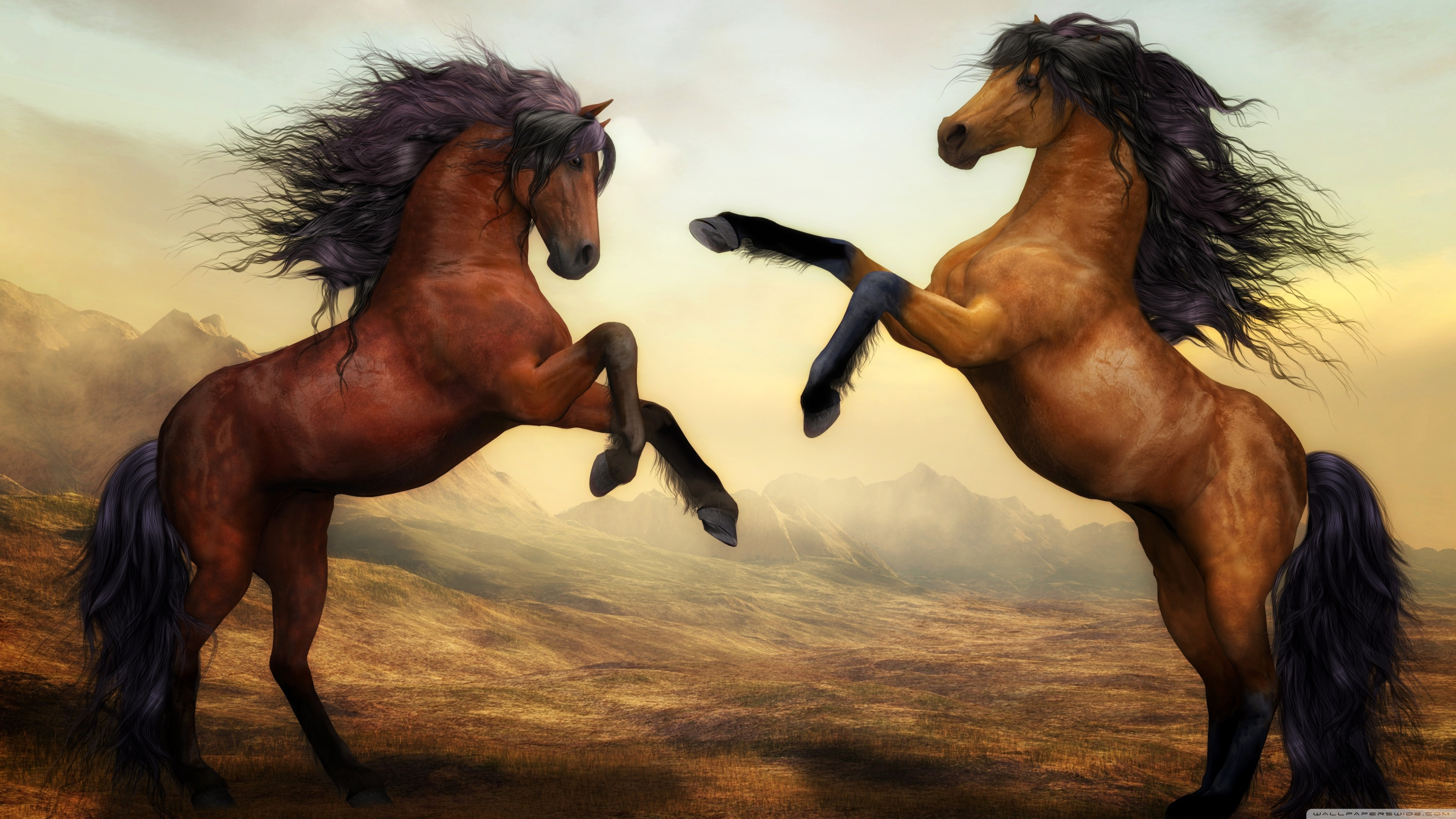 Free Photo Beautiful Horse Animal Horse Saddle Free Download Jooinn