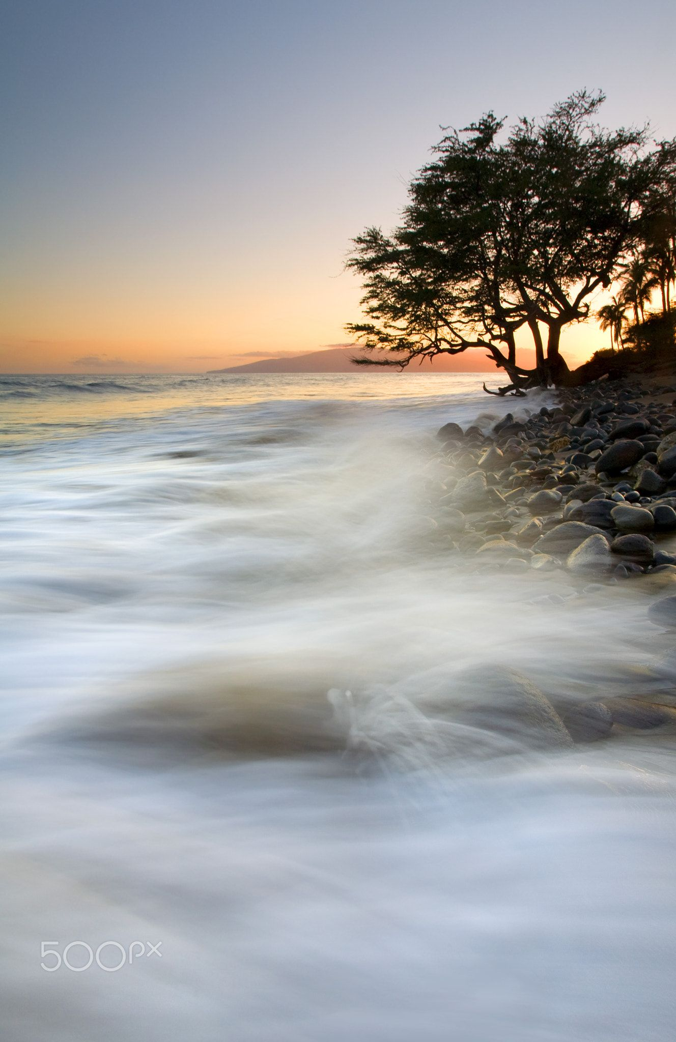 Sunset Waves - A lone tree anchors the coast and braces for the ...