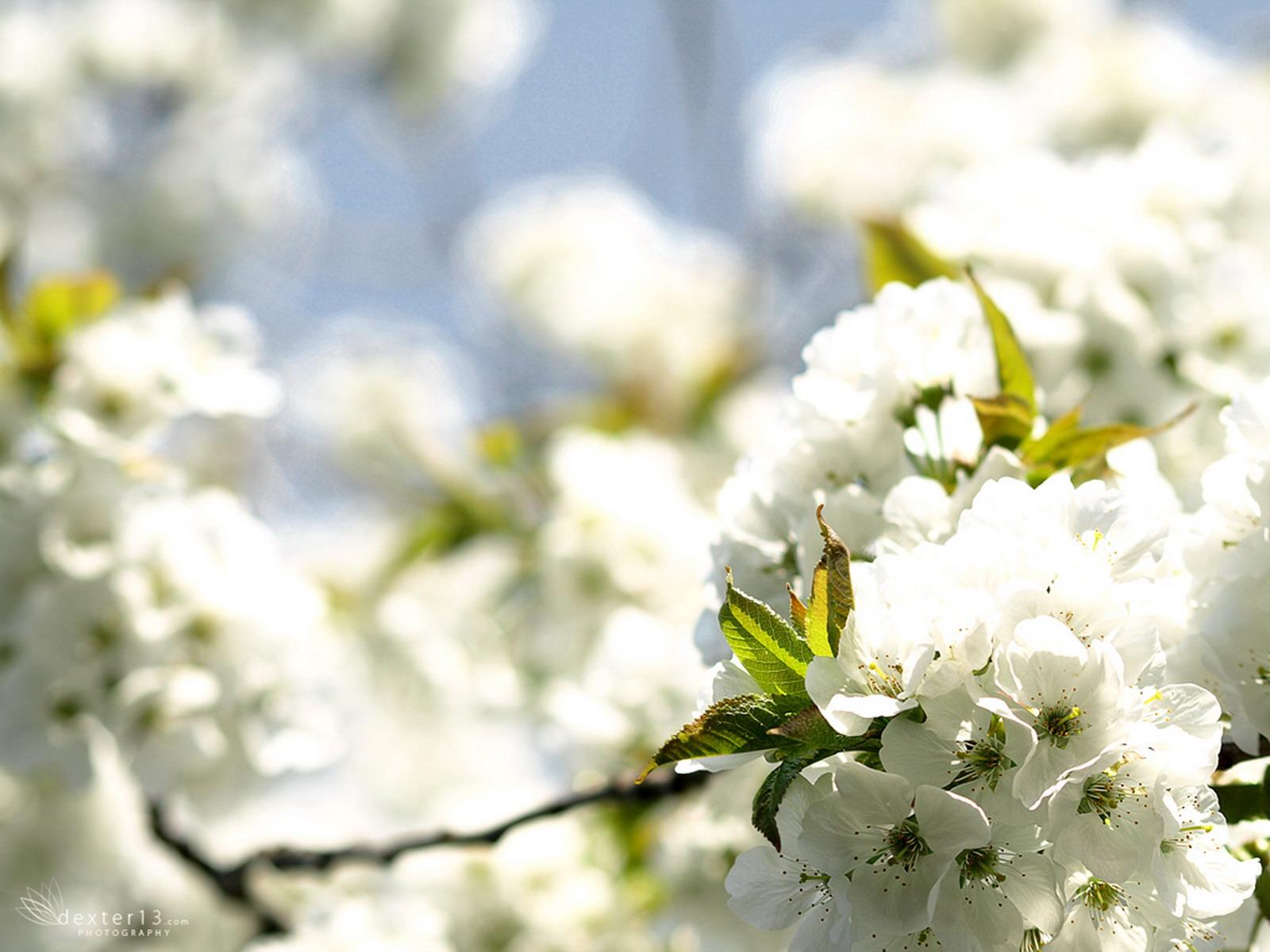Beautiful natural flower, Beautiful, Bloom, Blossom, Clean, HQ Photo