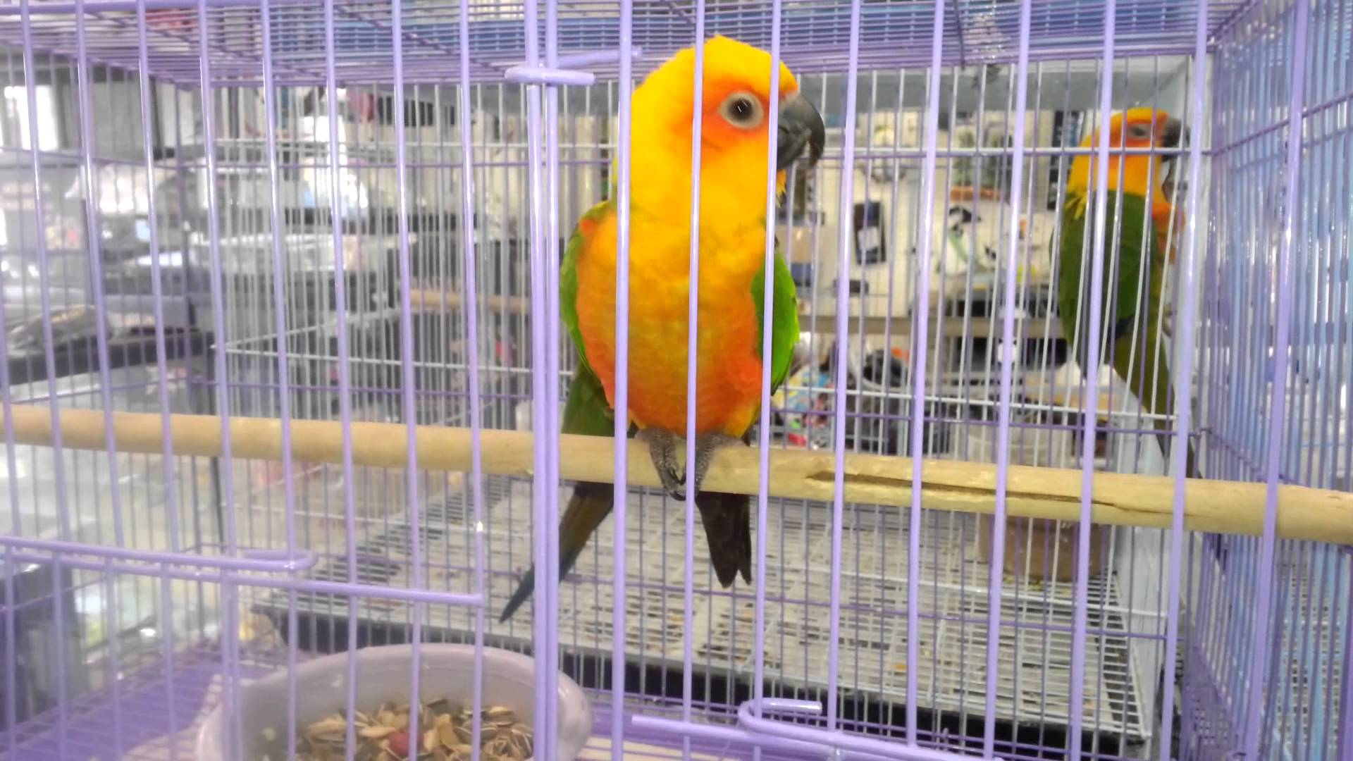Beautiful pet parrot photo