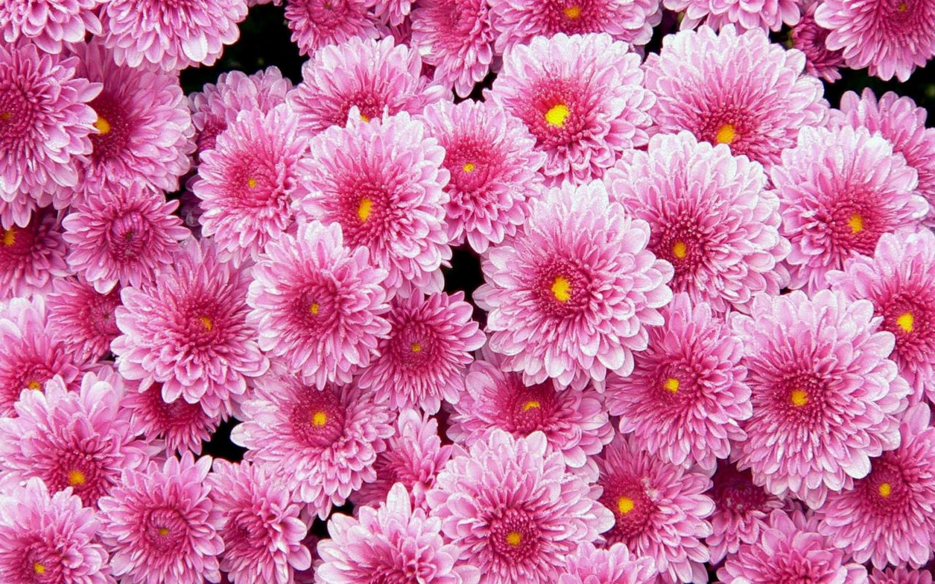 Free Photo Beautiful Pink Flower Garden Natural Nature Free