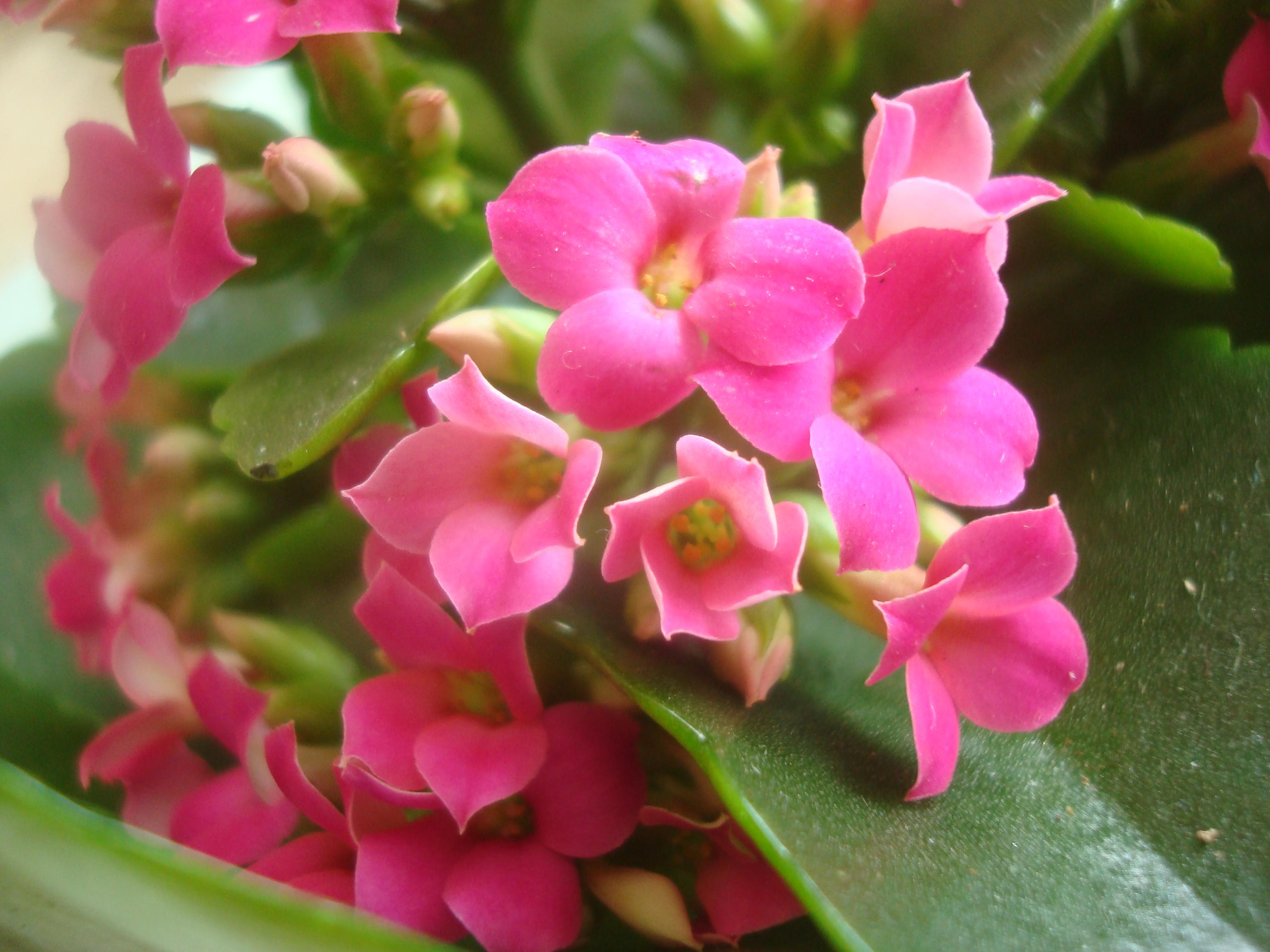 Free Photo Beautiful Pink Flower Garden Nature Plant Free