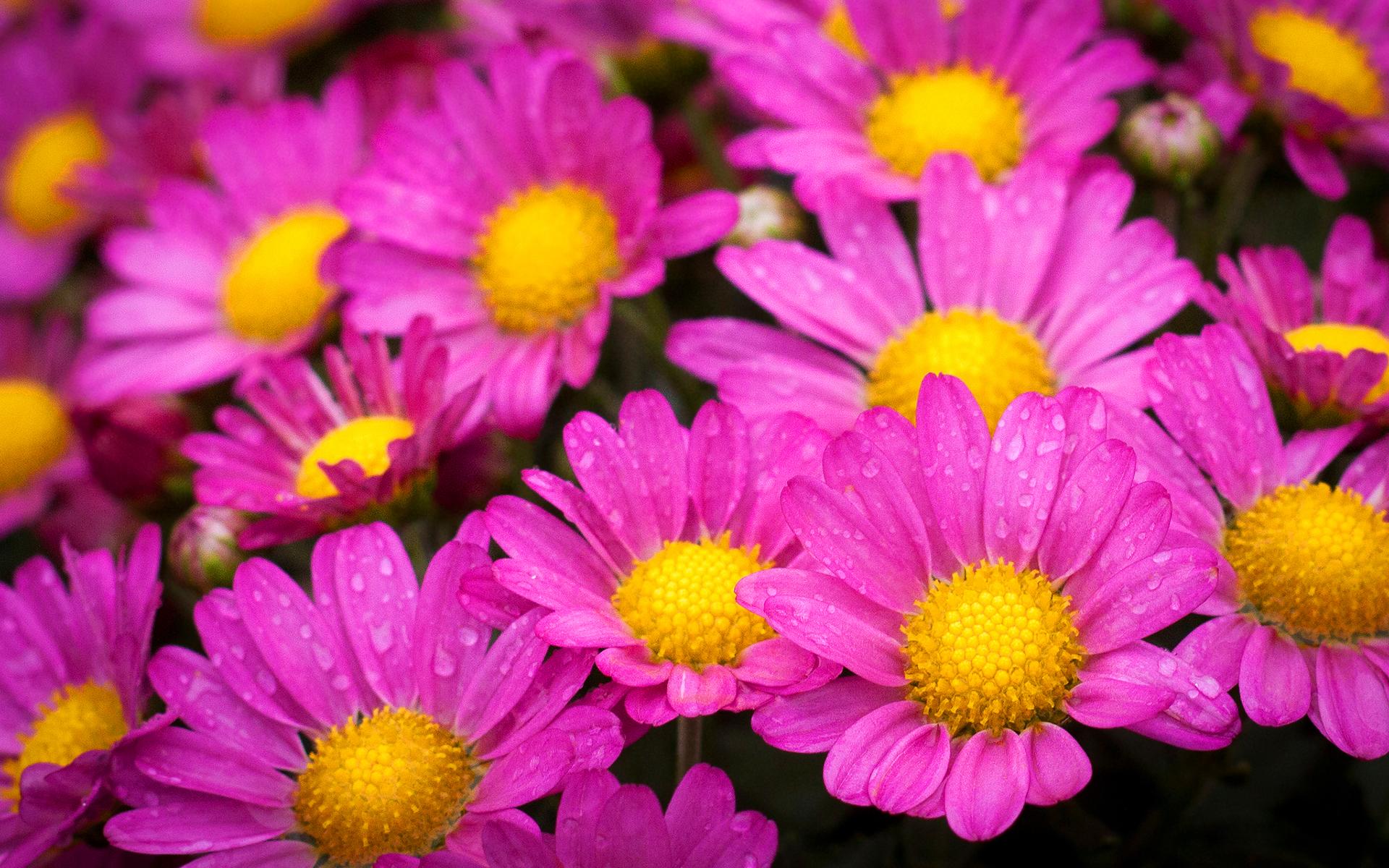 Free Photo Beautiful Pink Flowers Plant Pink Petal Free