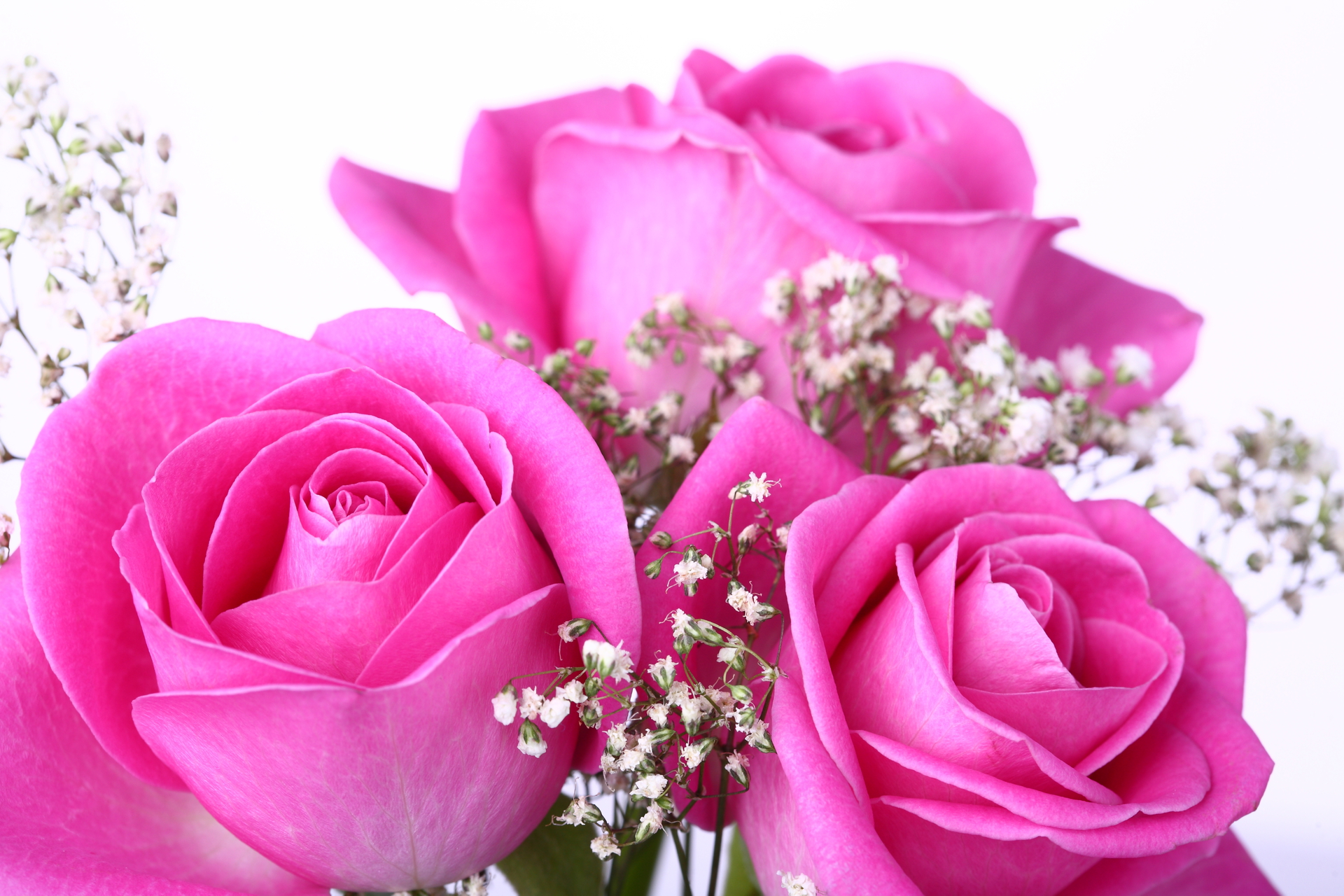Beautiful Pink Rose Flowers Images Hd Flowers Healthy