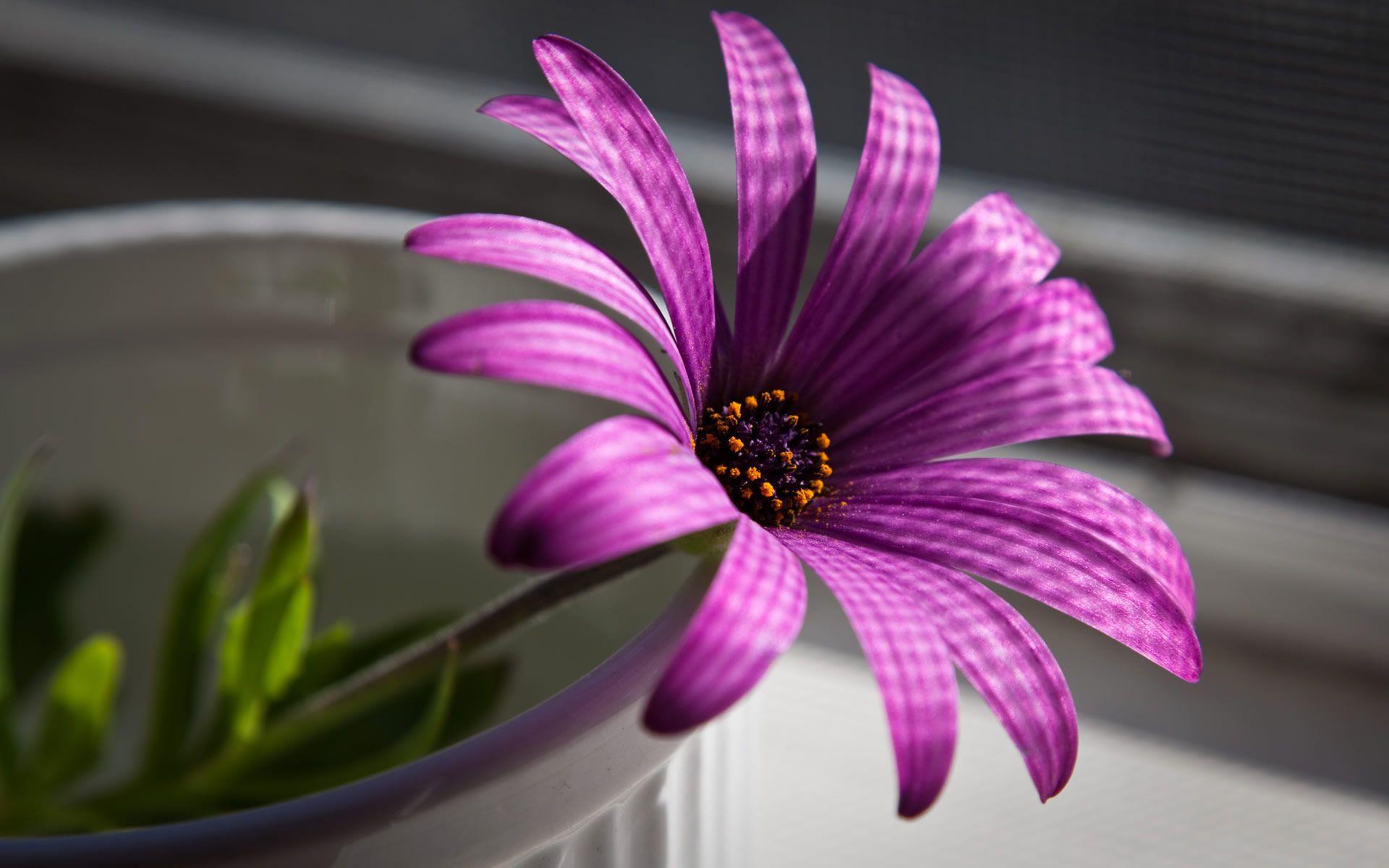 Free photo beautiful purple flower scene purple beautiful beautiful purple flower izmirmasajfo