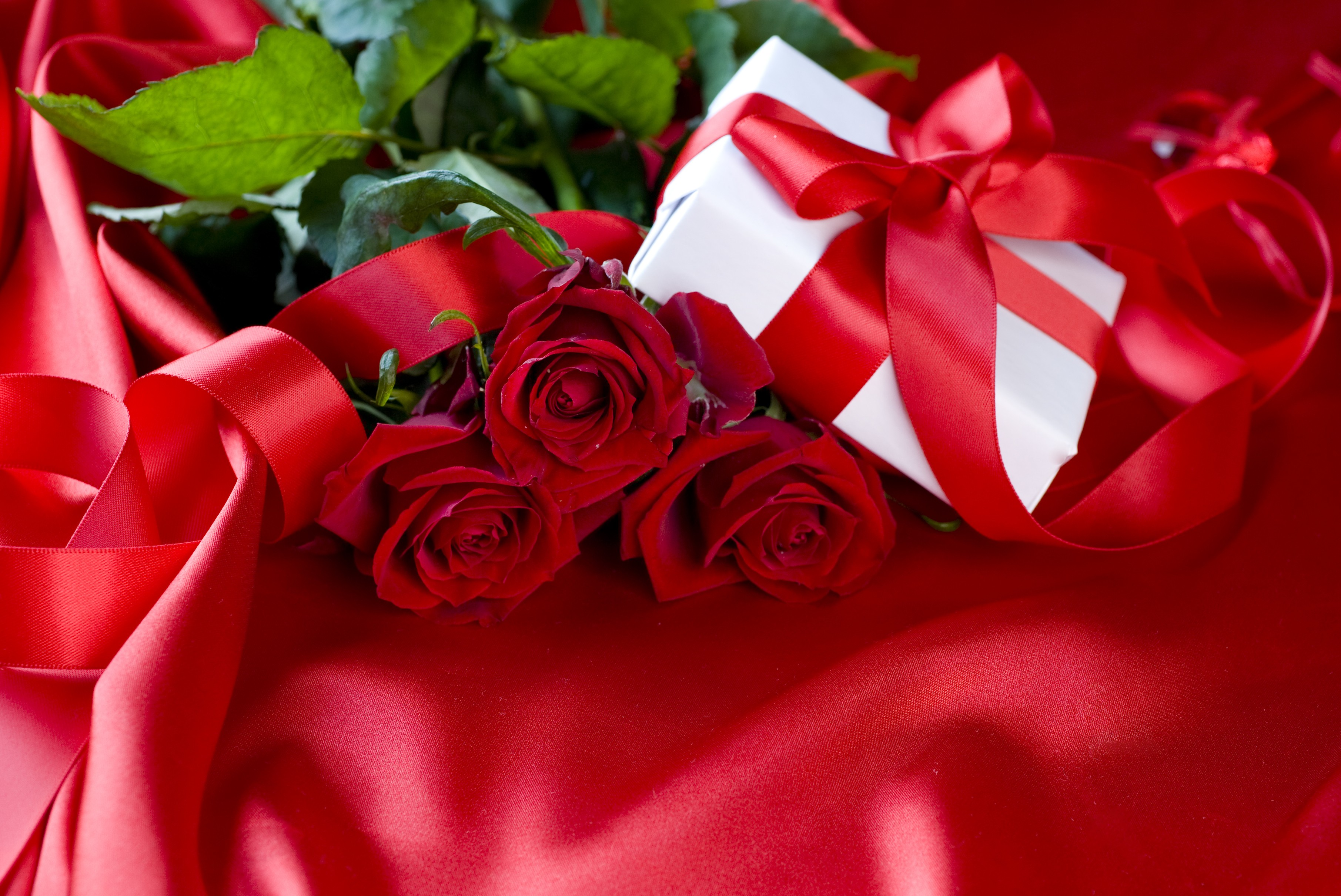 Flower: Pretty Holiday Day Still White Roses Abstract Lovely Ribbon ...