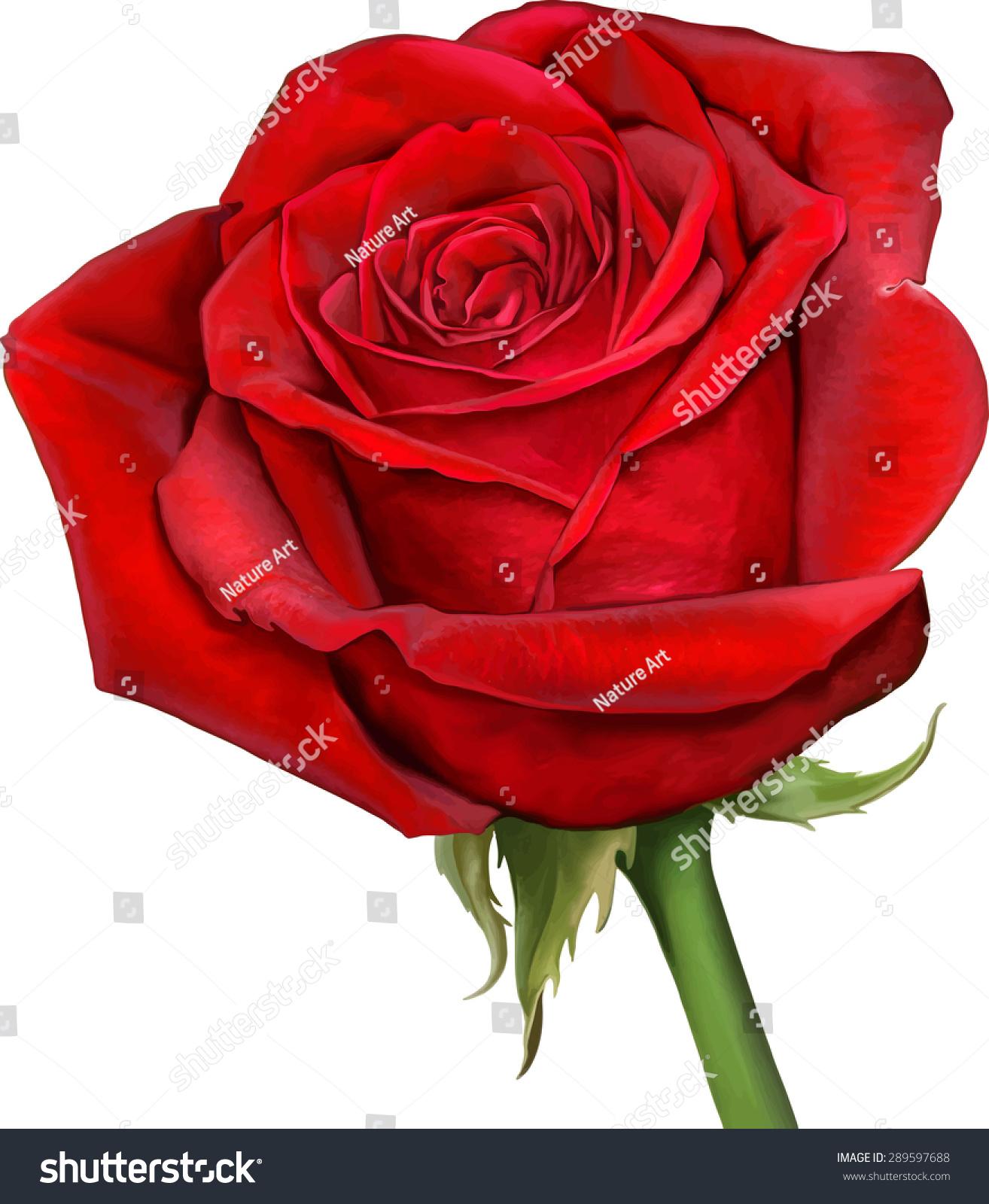 Free photo beautiful red rose red rose leaves free download beautiful colorful red rose flower isolated stock photo photo izmirmasajfo