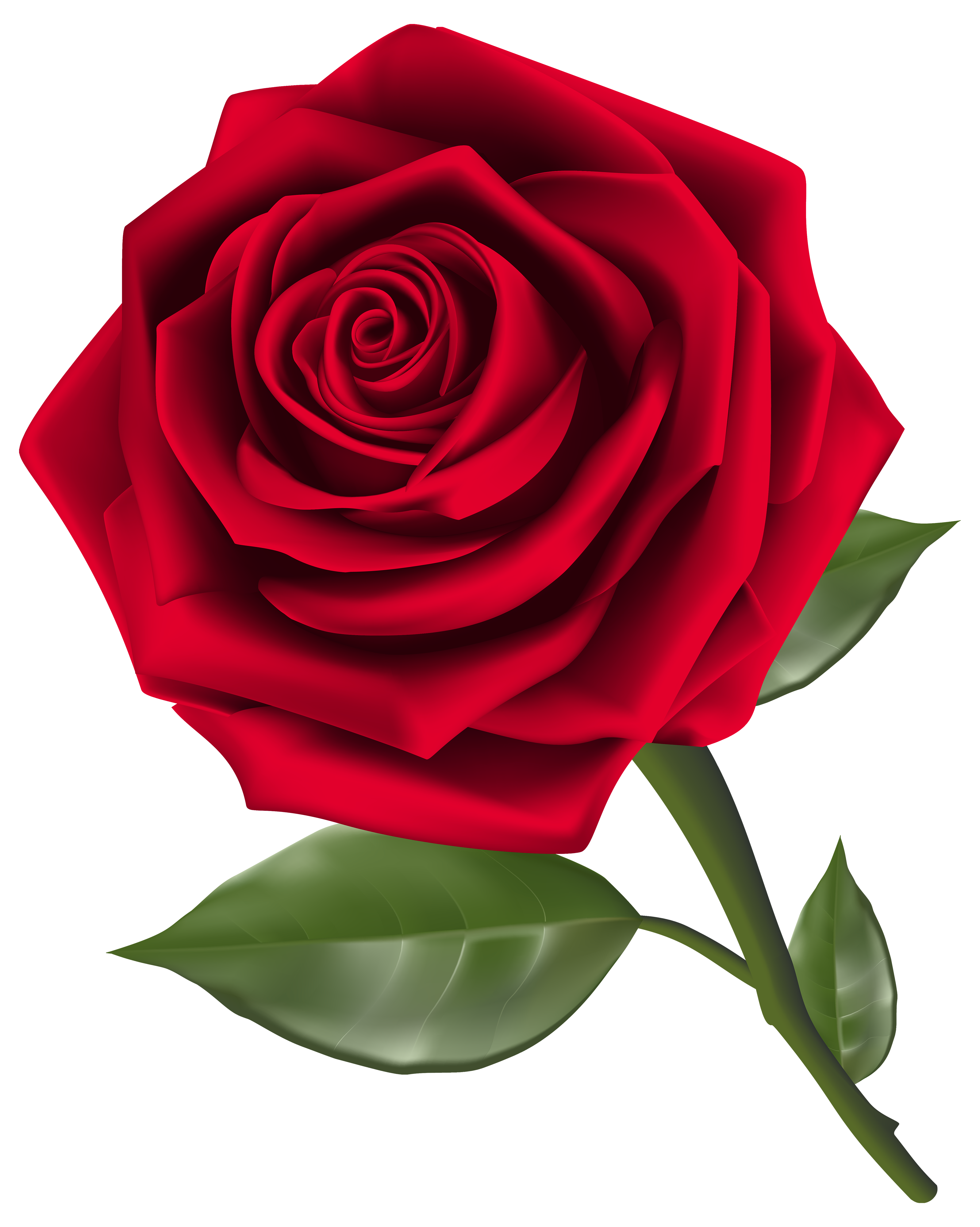 Beautiful Red Rose PNG Clipart - Best WEB Clipart